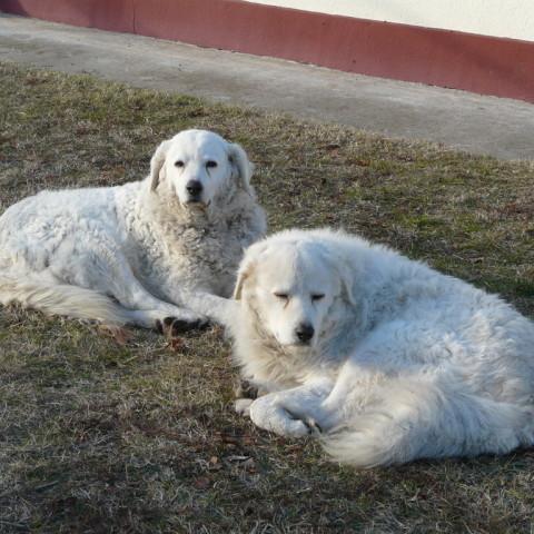 Sina und Arthur beim sonnen