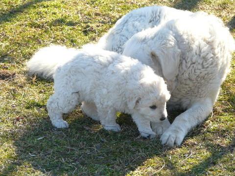 Lajka und der Welpen-Junge