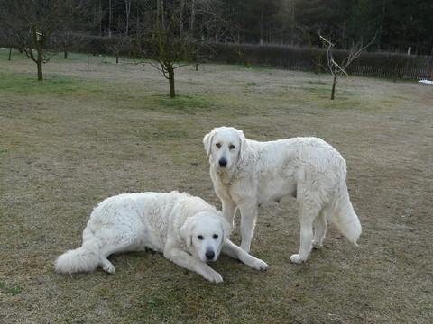 Lajka und Csezter im Garten