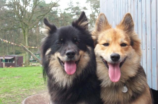 Jansen und Jeany