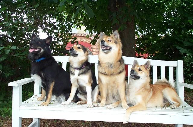 Biene, Lilli, Jeany und Frieda