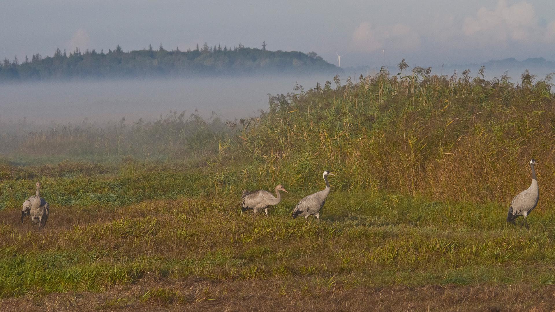 ... der Nebel zaubert Stimmungen in die Landschaft