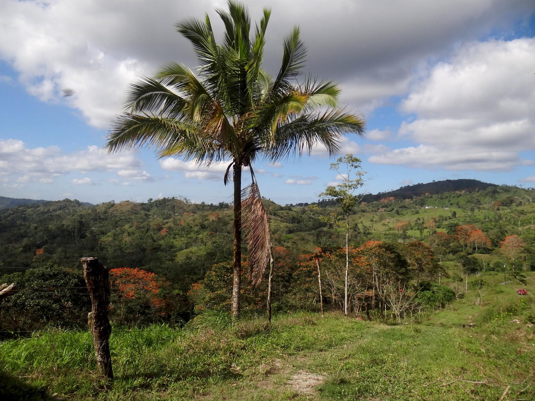 In der Nähe von Turrialba breitet sich Hügelland aus...