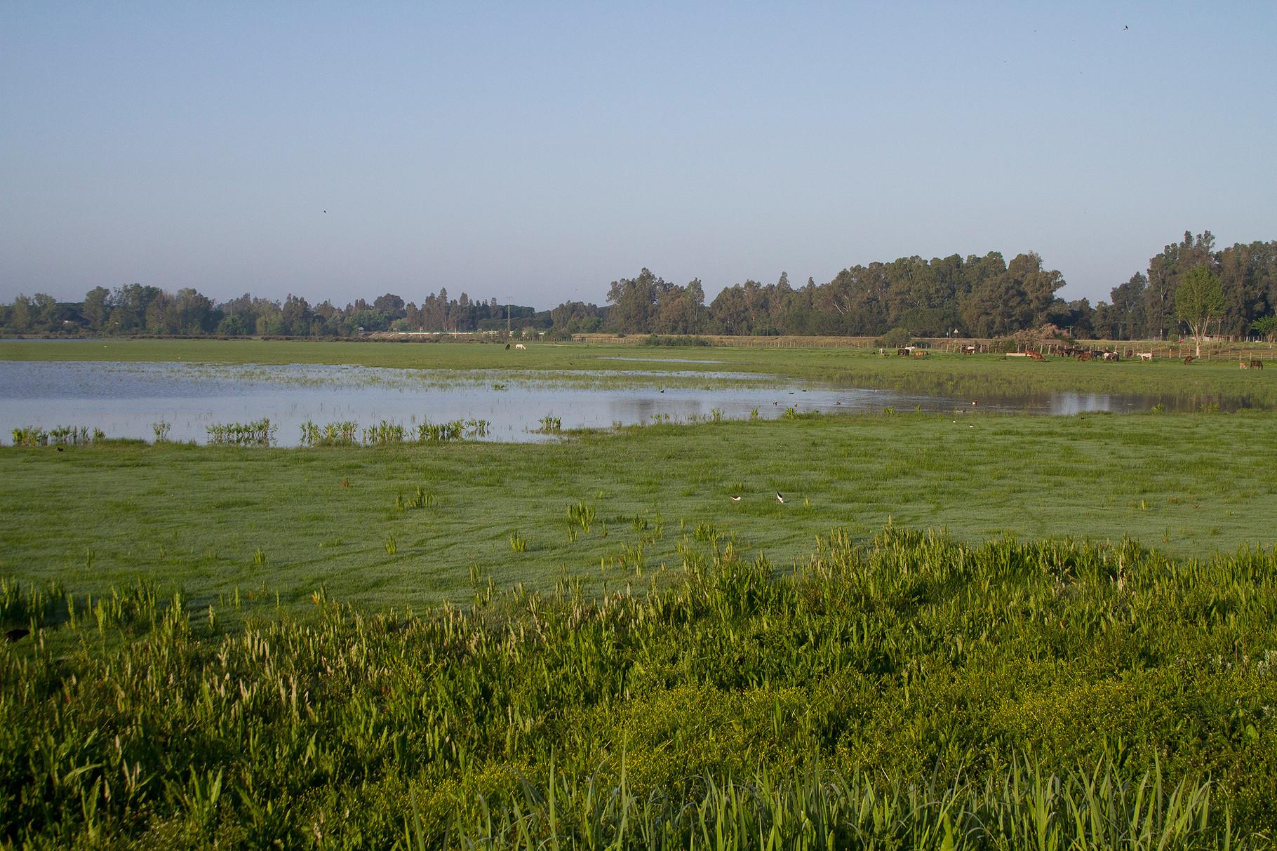 Sumpfwiesen und Pferde prägen die Landschaft der Doñana in der Nähe von El Rocio