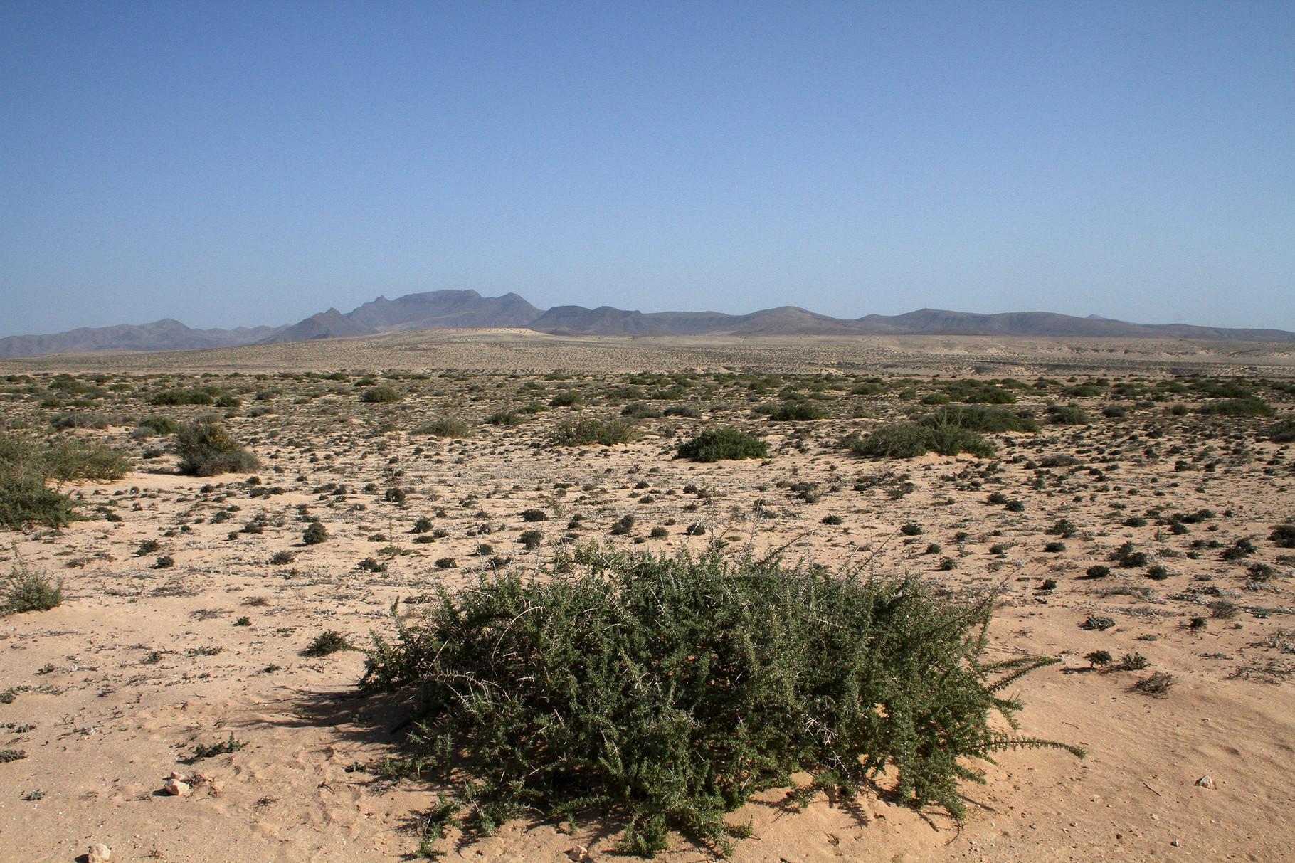 Die Jandia-Wüste, eigentlich eine Kleinstrauch-Halbwüste, bei Costa Calma...
