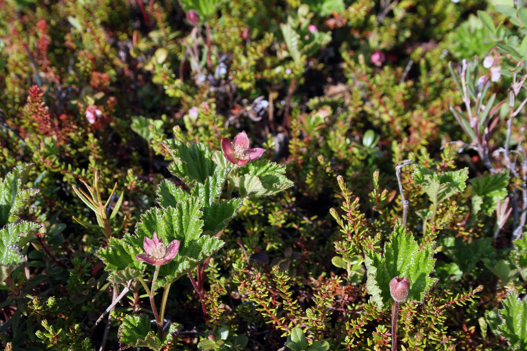 .. . und speziellen blühenden Pflanzen