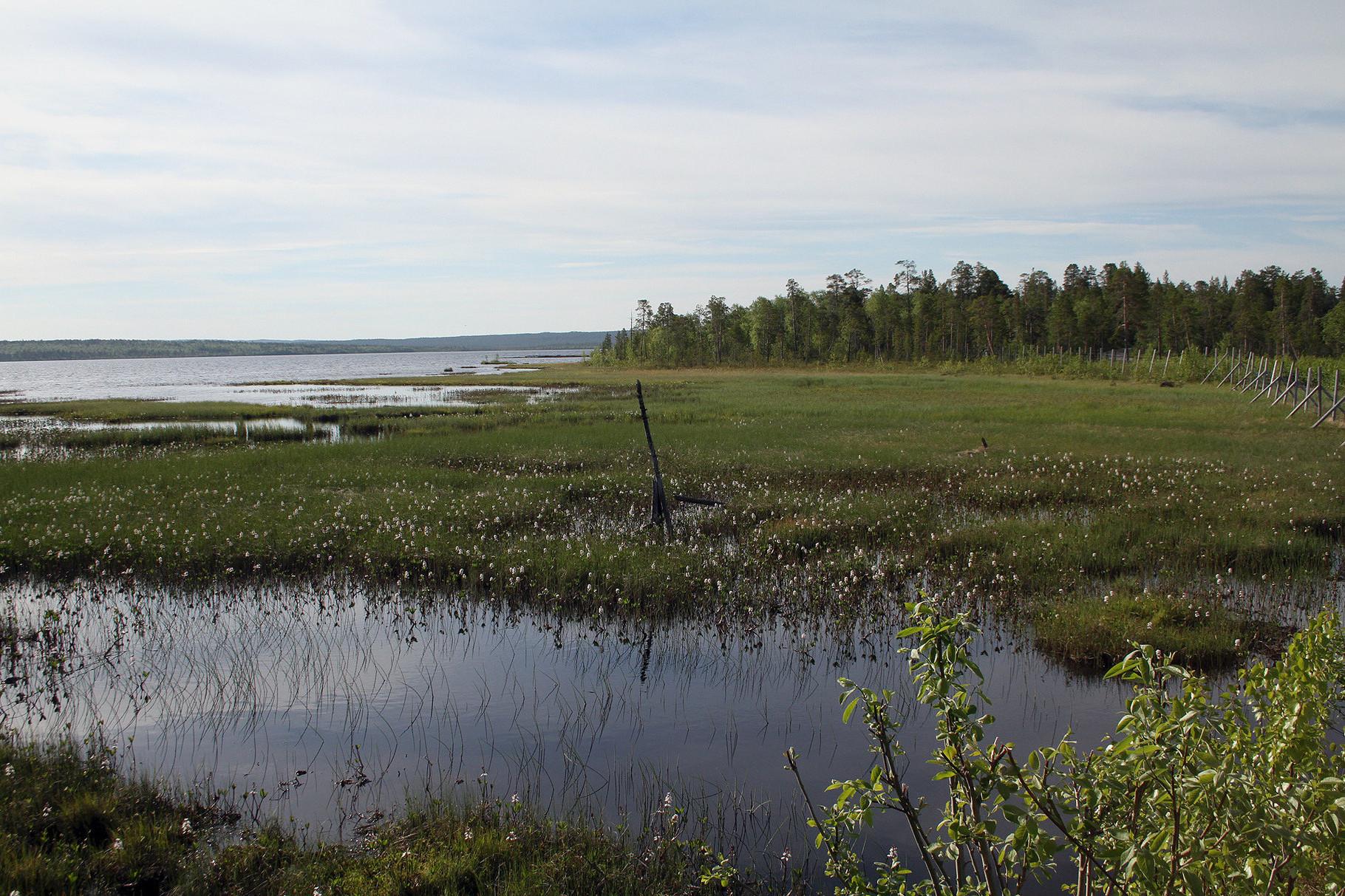 Das Pasvik-Tal südlich von Kirkenes  ist ein Taiga-Waldgebiet mit vielen Seen und grossen Sümpfen
