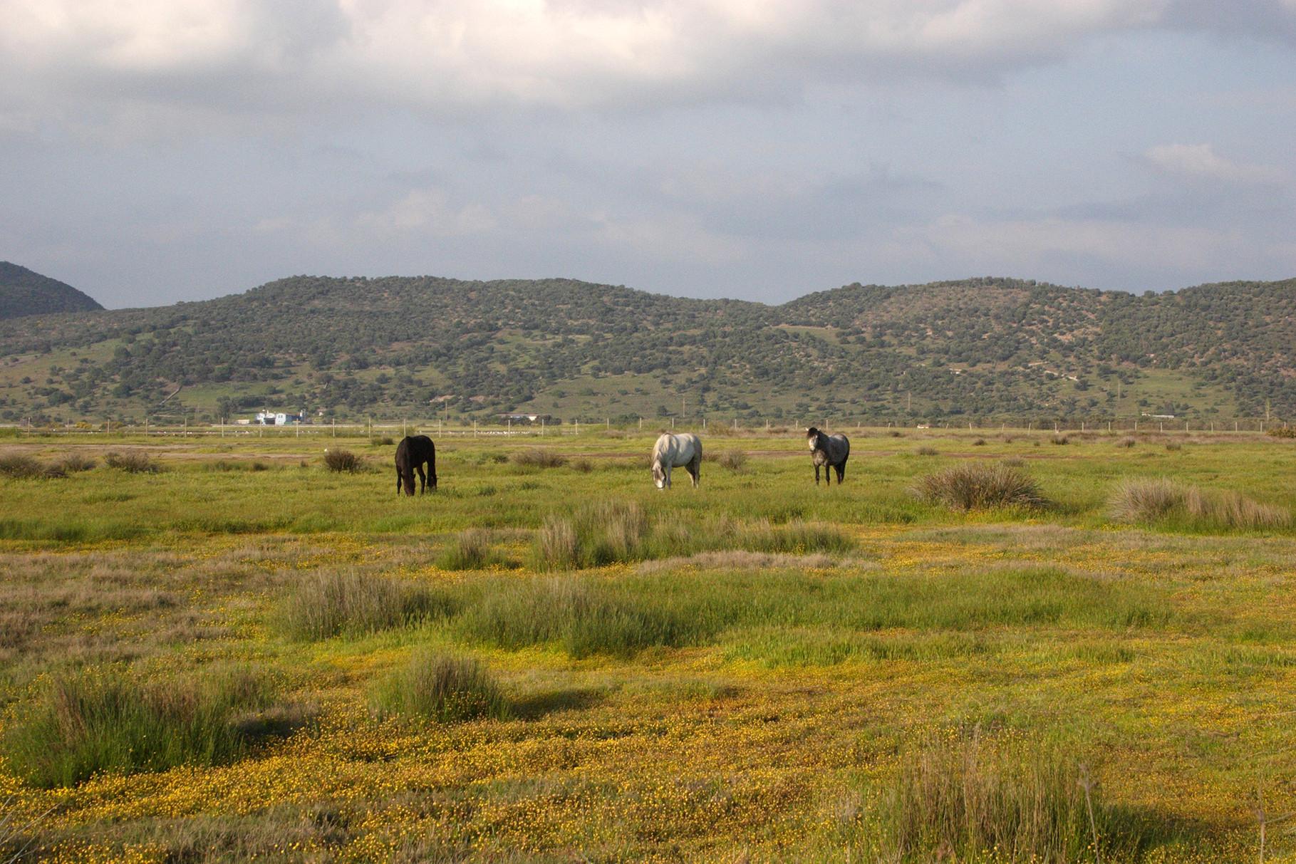 Die Alykes Feuchtwiesen in der Nähe der Kalloni Salzpfannen