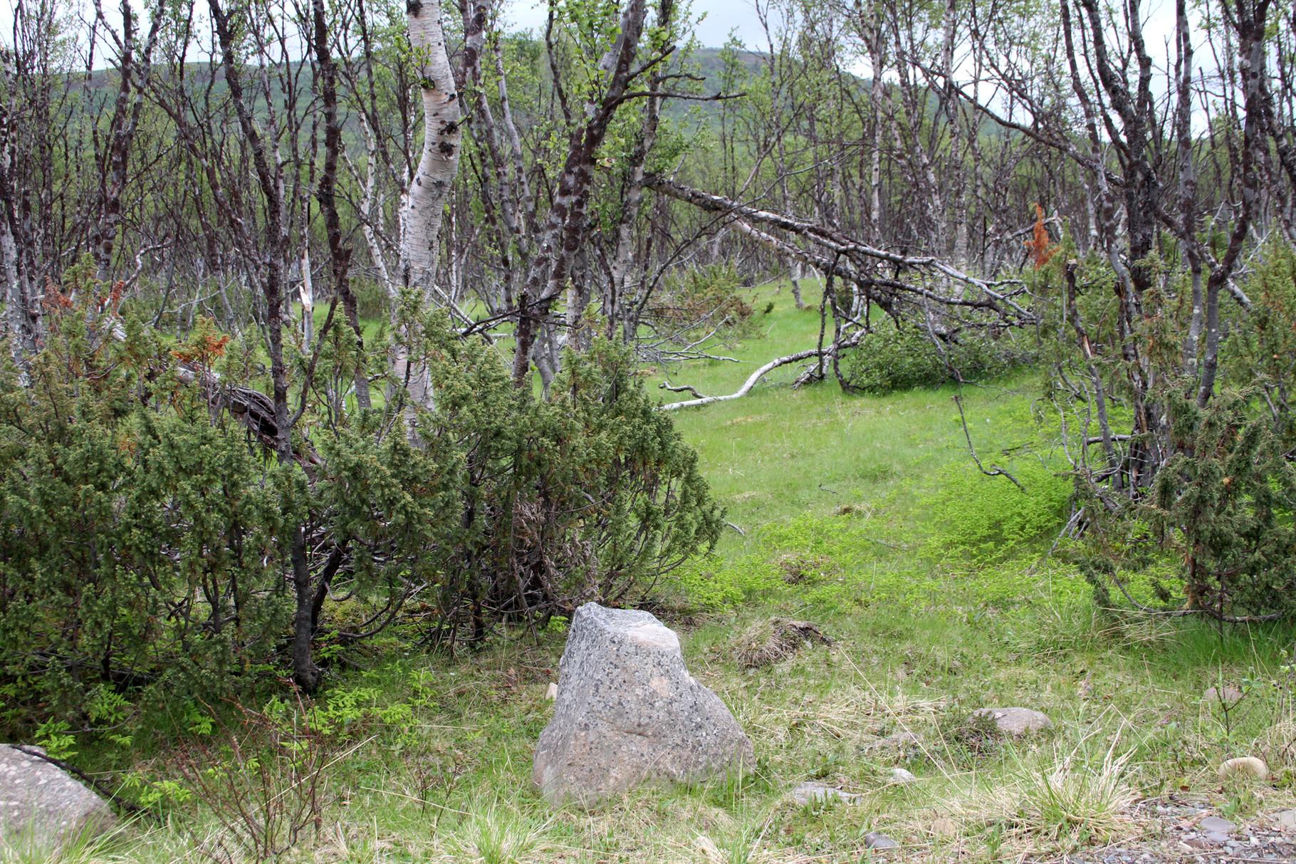 In diesem Habitat bei der Ortschaft Vestre Jakobselv - zwischen Vadso und Nesseby -...