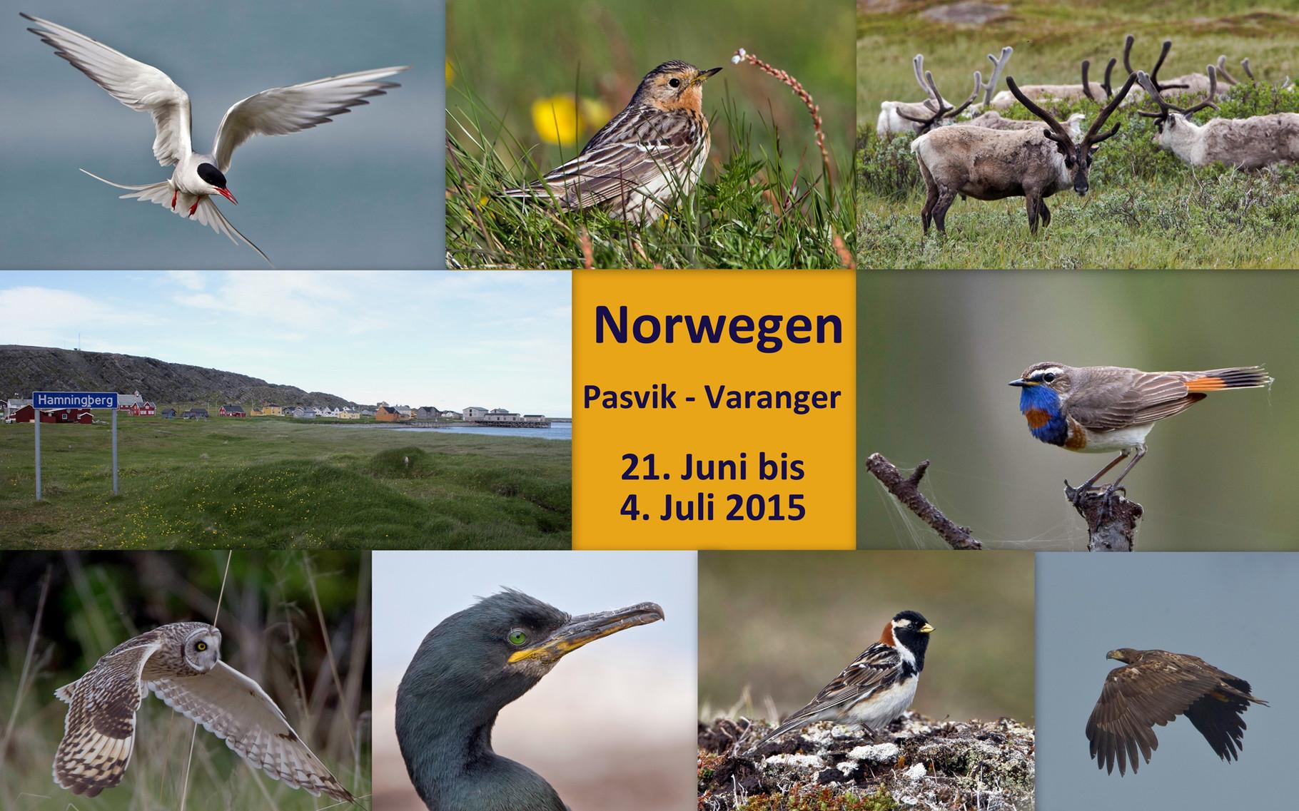 Starte die Bilder-Galerie unserer Norwegen-Birdingreise