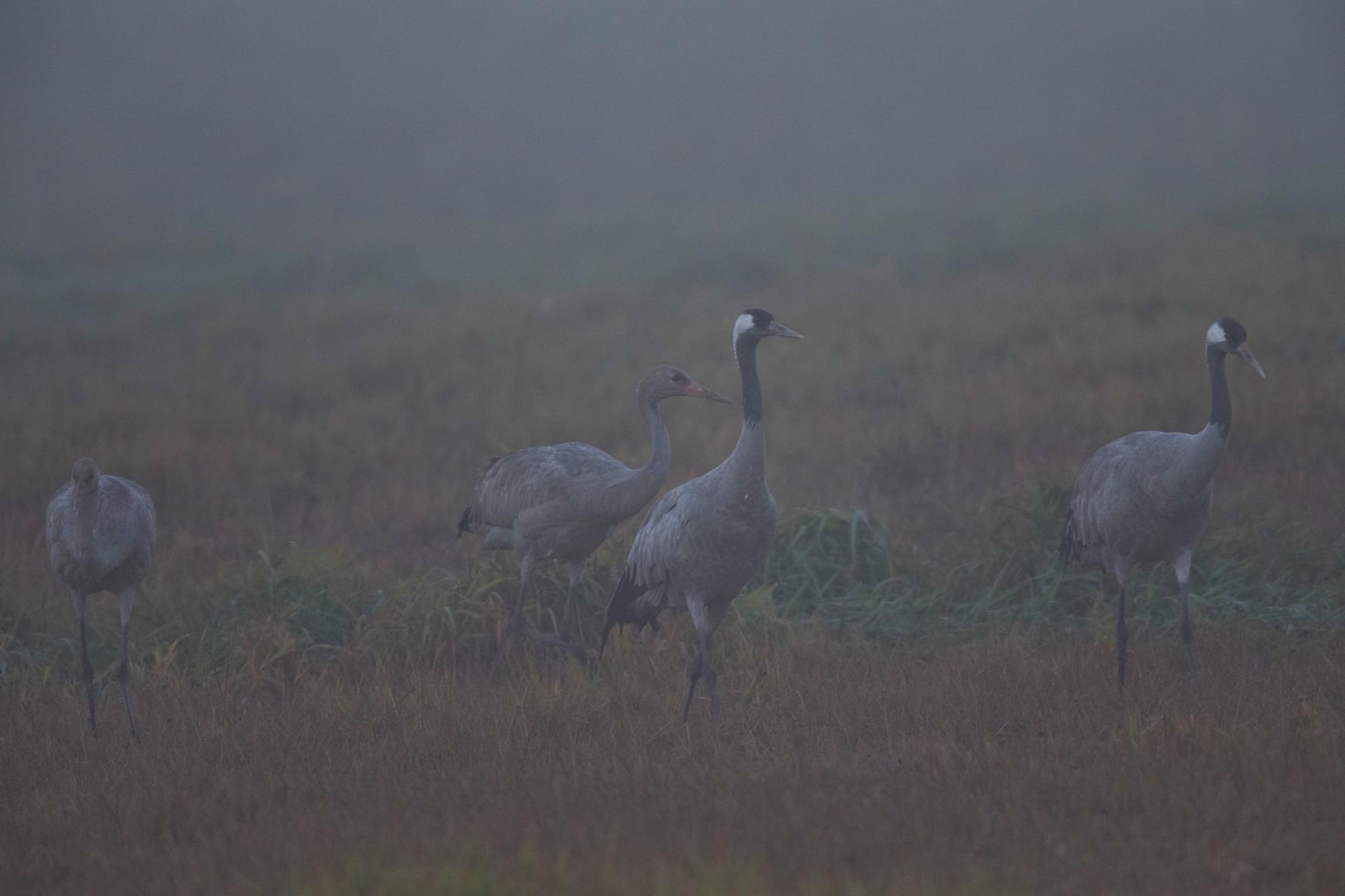 7:30 Uhr: der Nebel lichtet sich ein wenig