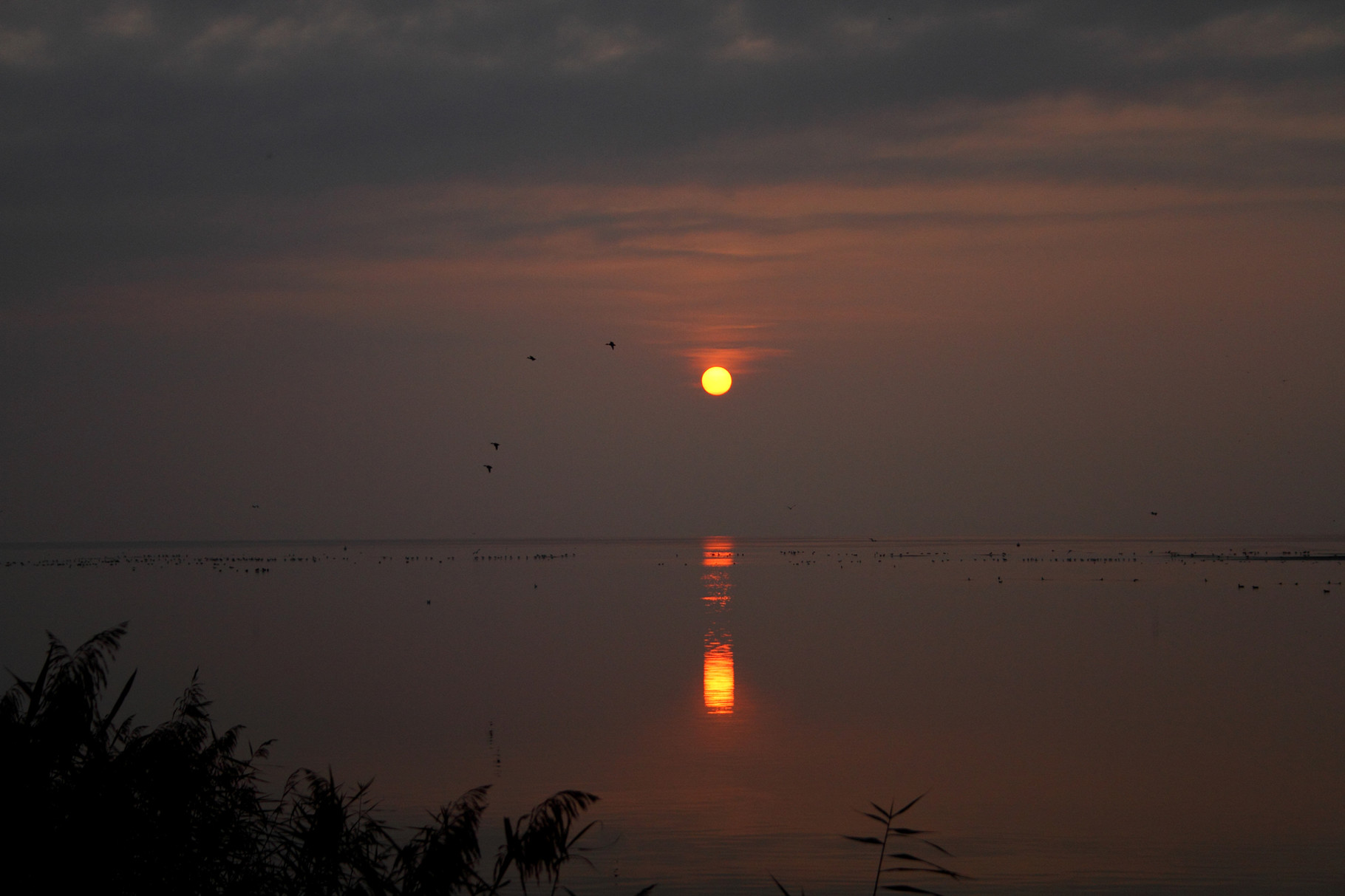 Sonnenuntergang am Neuenburgersee (La Sauge)