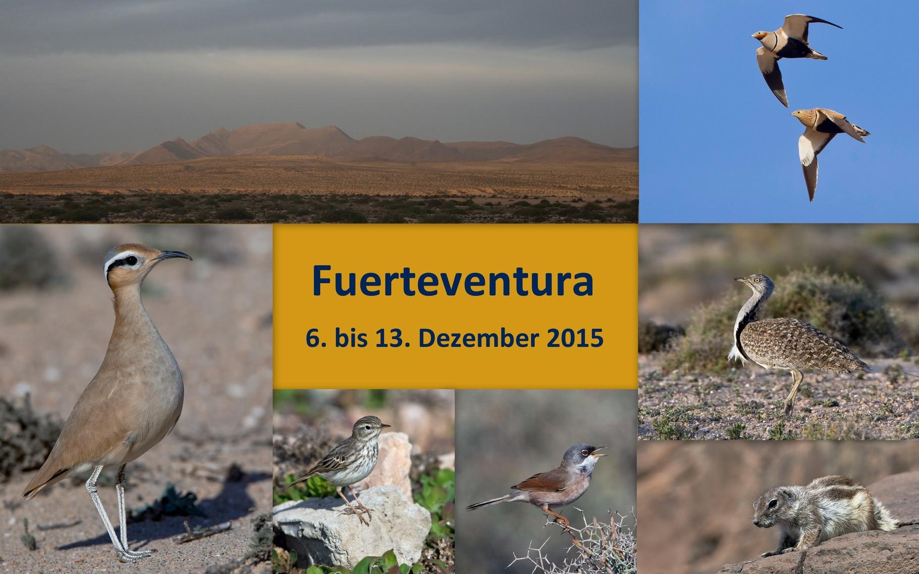 Starte die Bilder-Galerie der Fuerteventura-Birdingreise