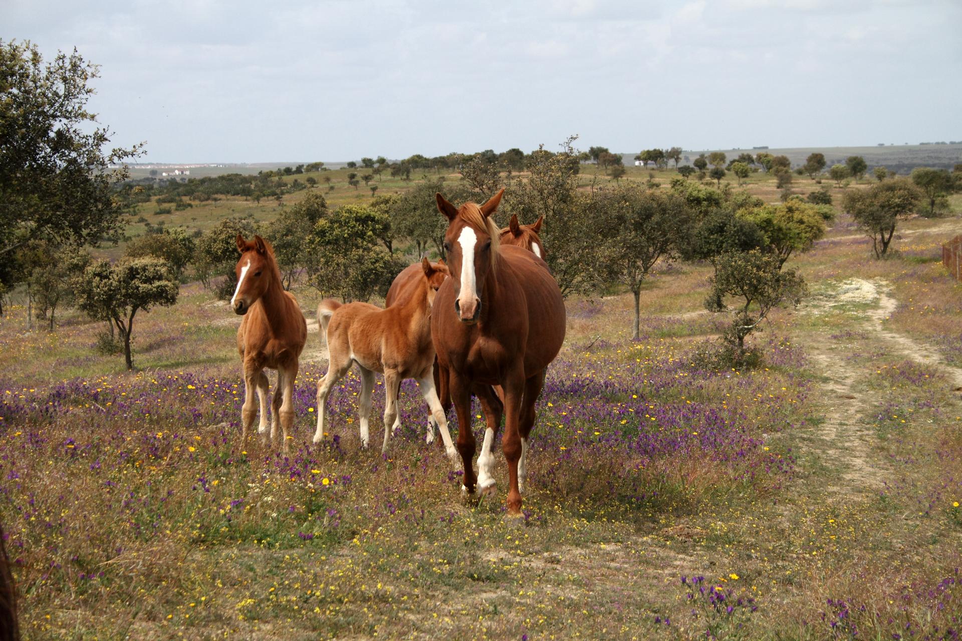Glückliche Pferde ...