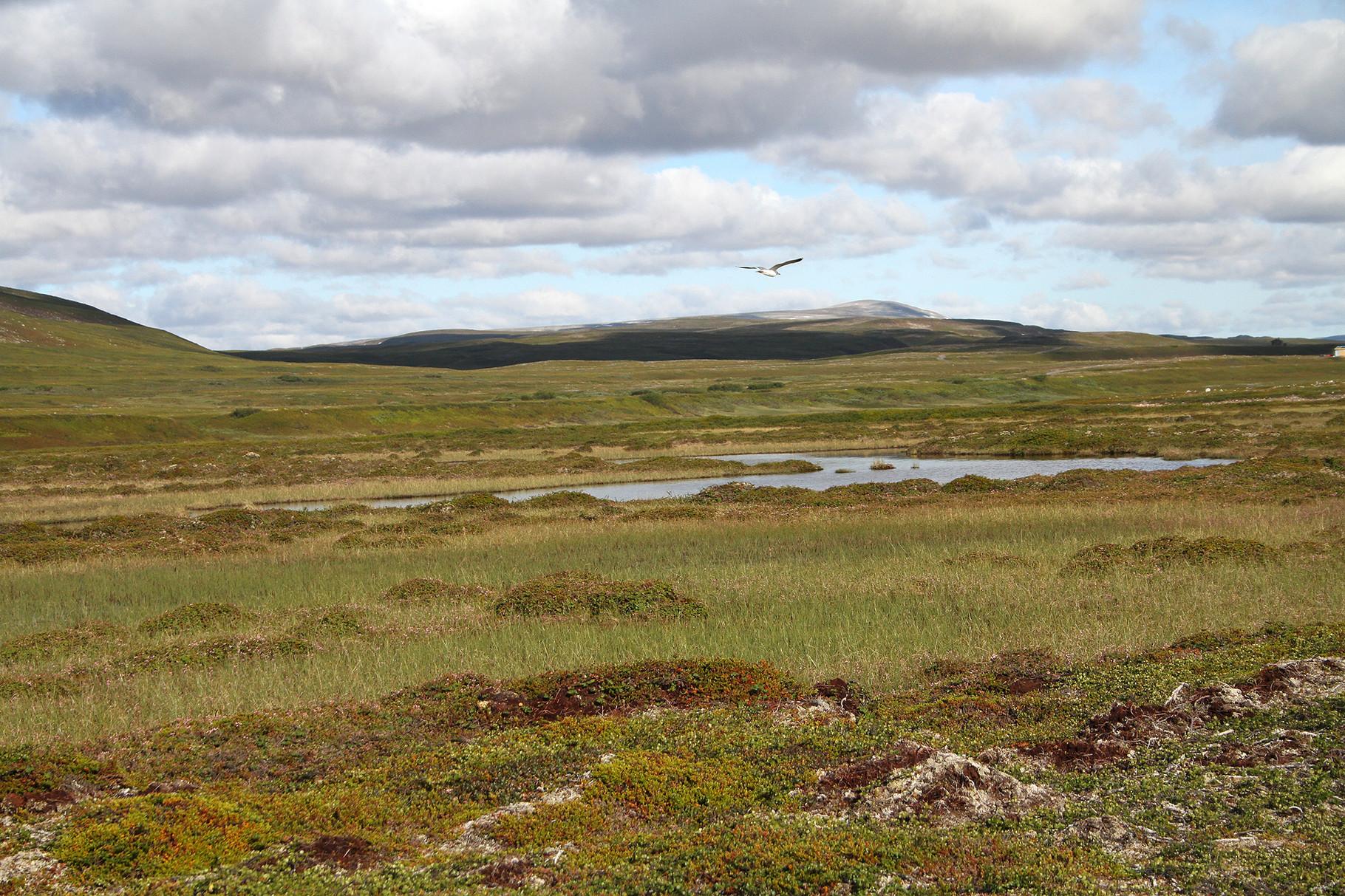 Beim Dorf Komagvaer führt eine Schotterstrasse ins Landesinnere durch schöne Tundra-Landschaft