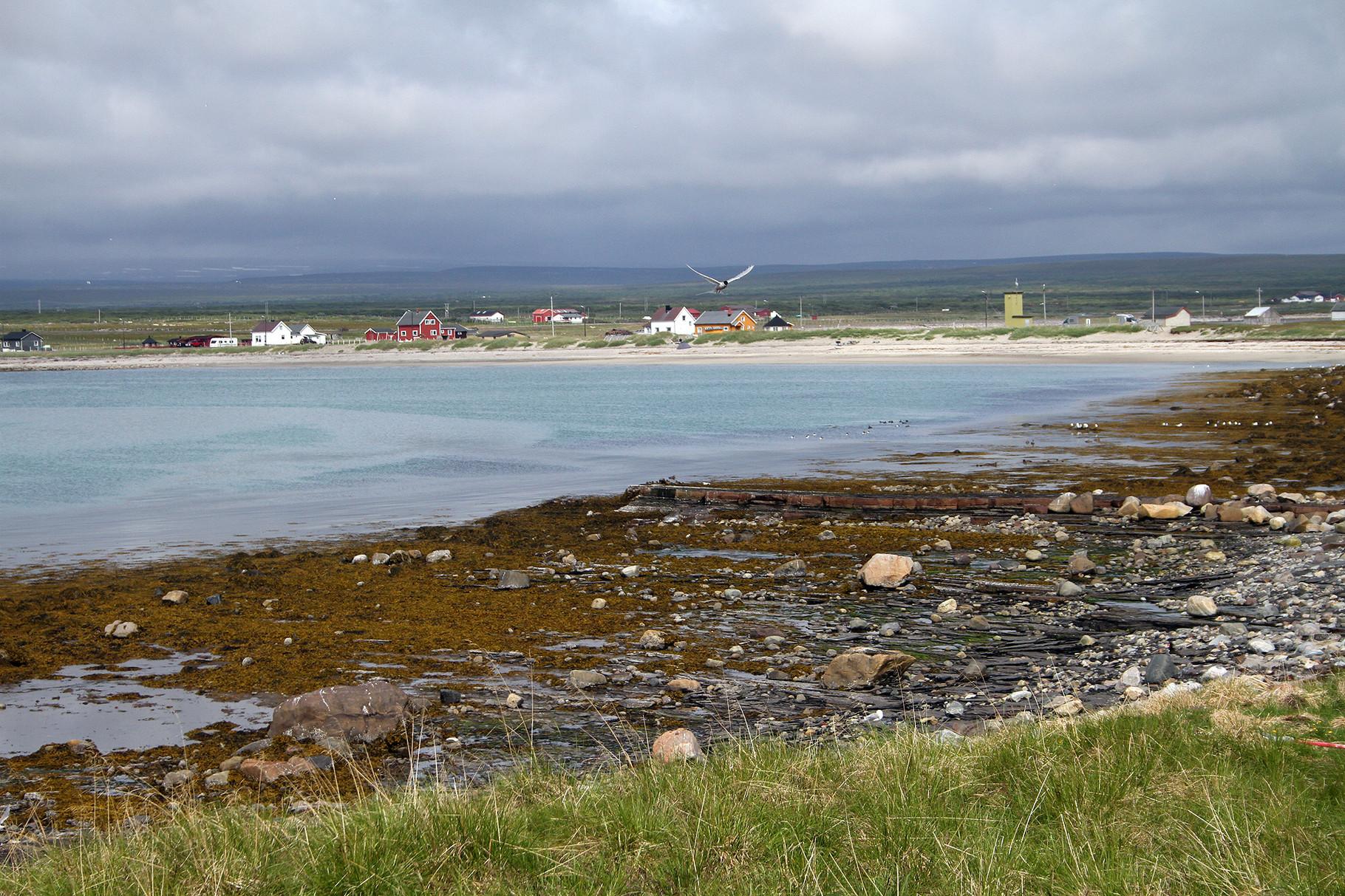 Ornithologisch interessant ist die Halbinsel Ekkeroy, beispielsweise für eine grössere Brutkolonie von Küstenseeschwalben