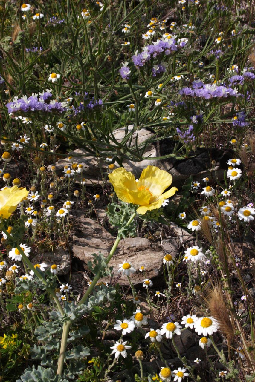Typische Flora an der Westküste