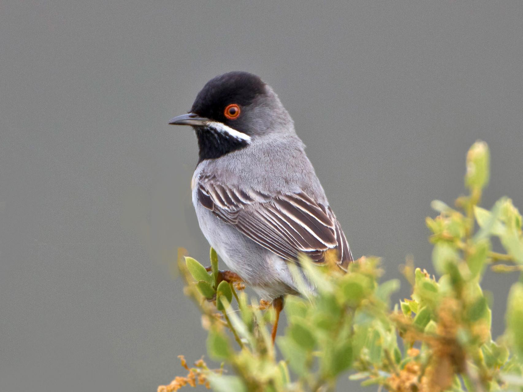 Er scheint sich seiner ornithologischen Bedeutung bewusst zu sein und zeigt sich nicht allzu häufig...