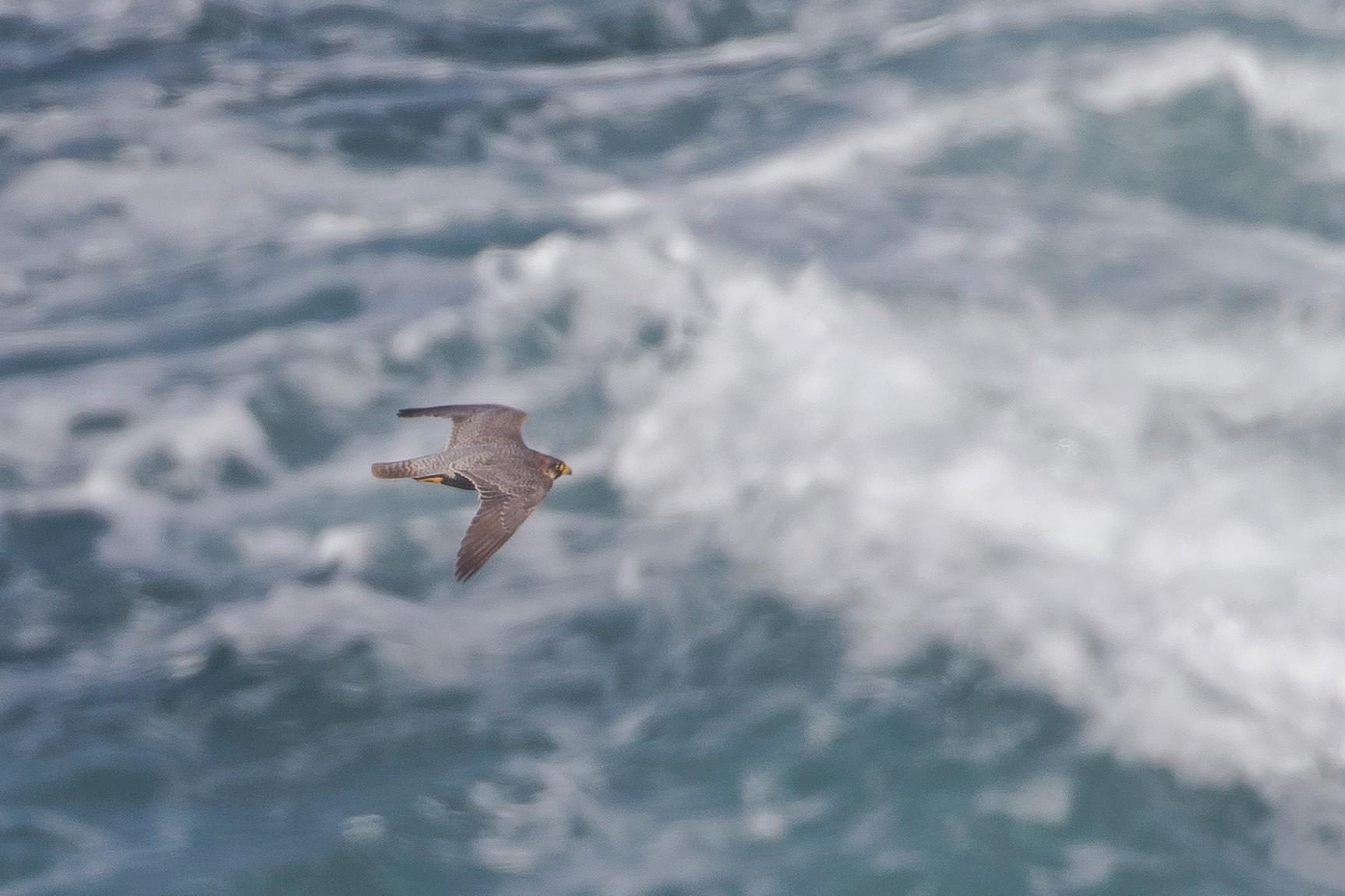 ... auch mal beim Flug über die Wellen fotografieren