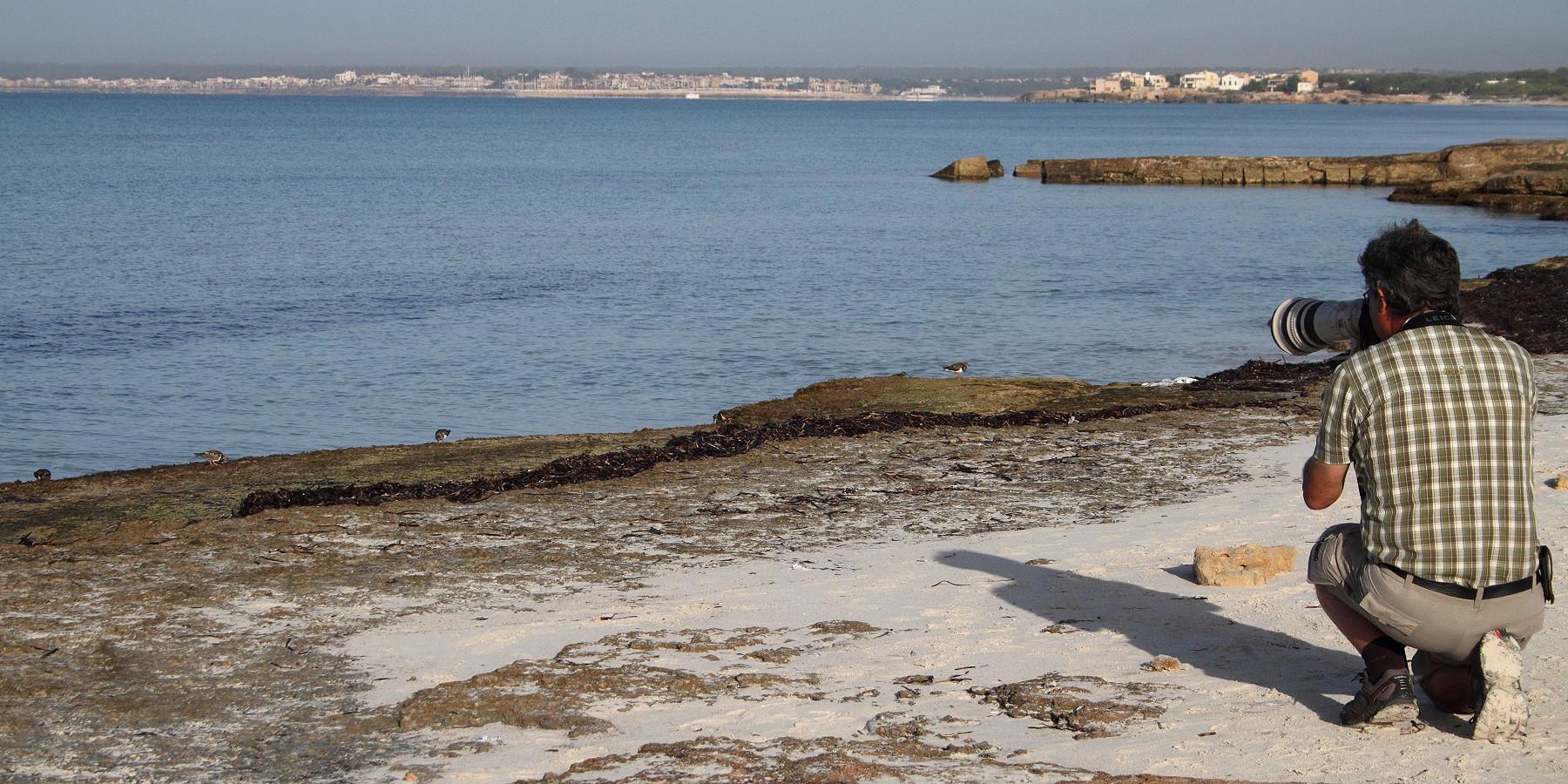 """Besucht man den Strand von Es Trenc am frühen Morgen, ist er menschenleer und man kann dort Steinwälzer statt """"Sandwälzer"""" fotografieren"""
