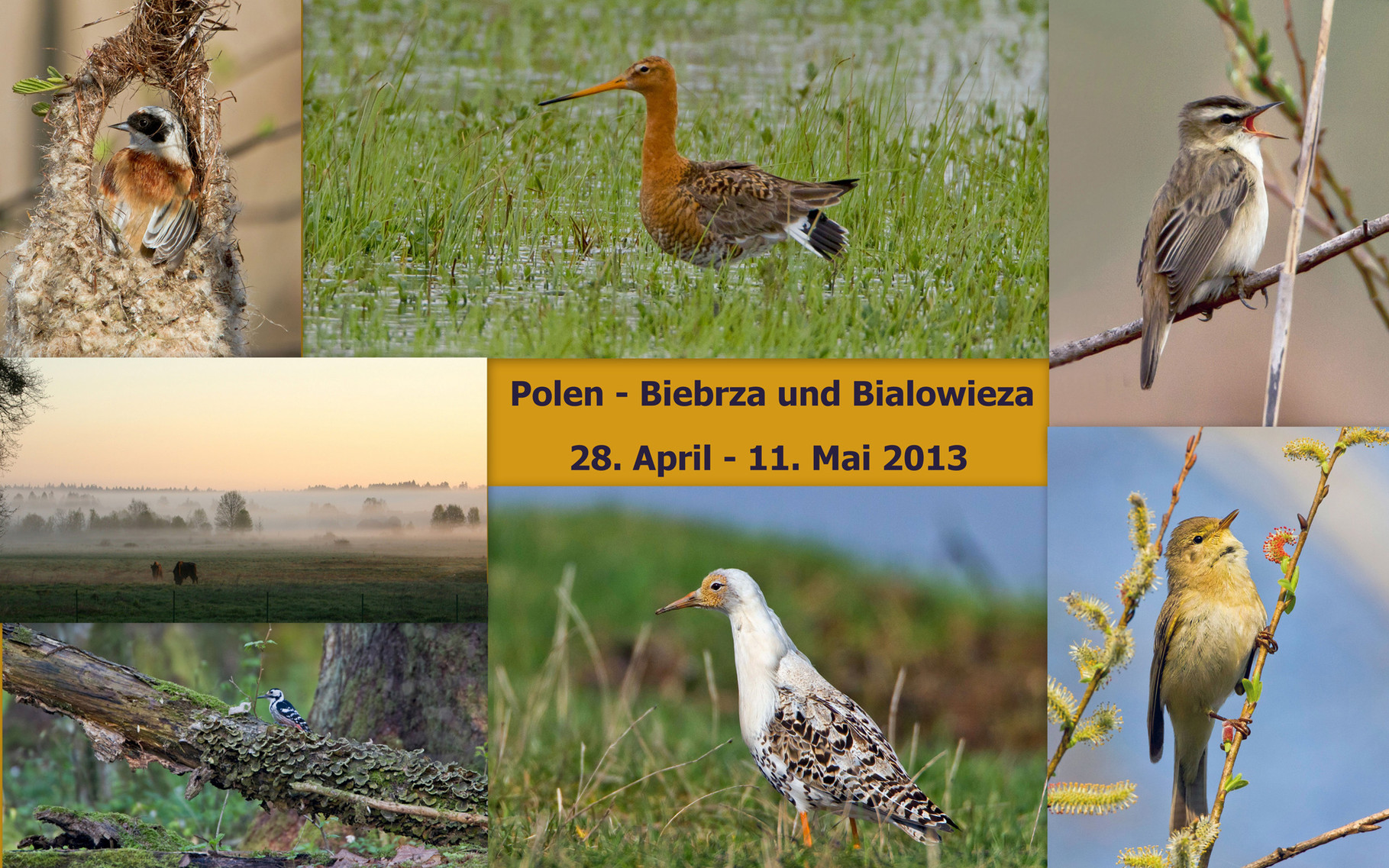 Starte die Bilder-Galerie unserer Polen-Reise April/Mai 2013