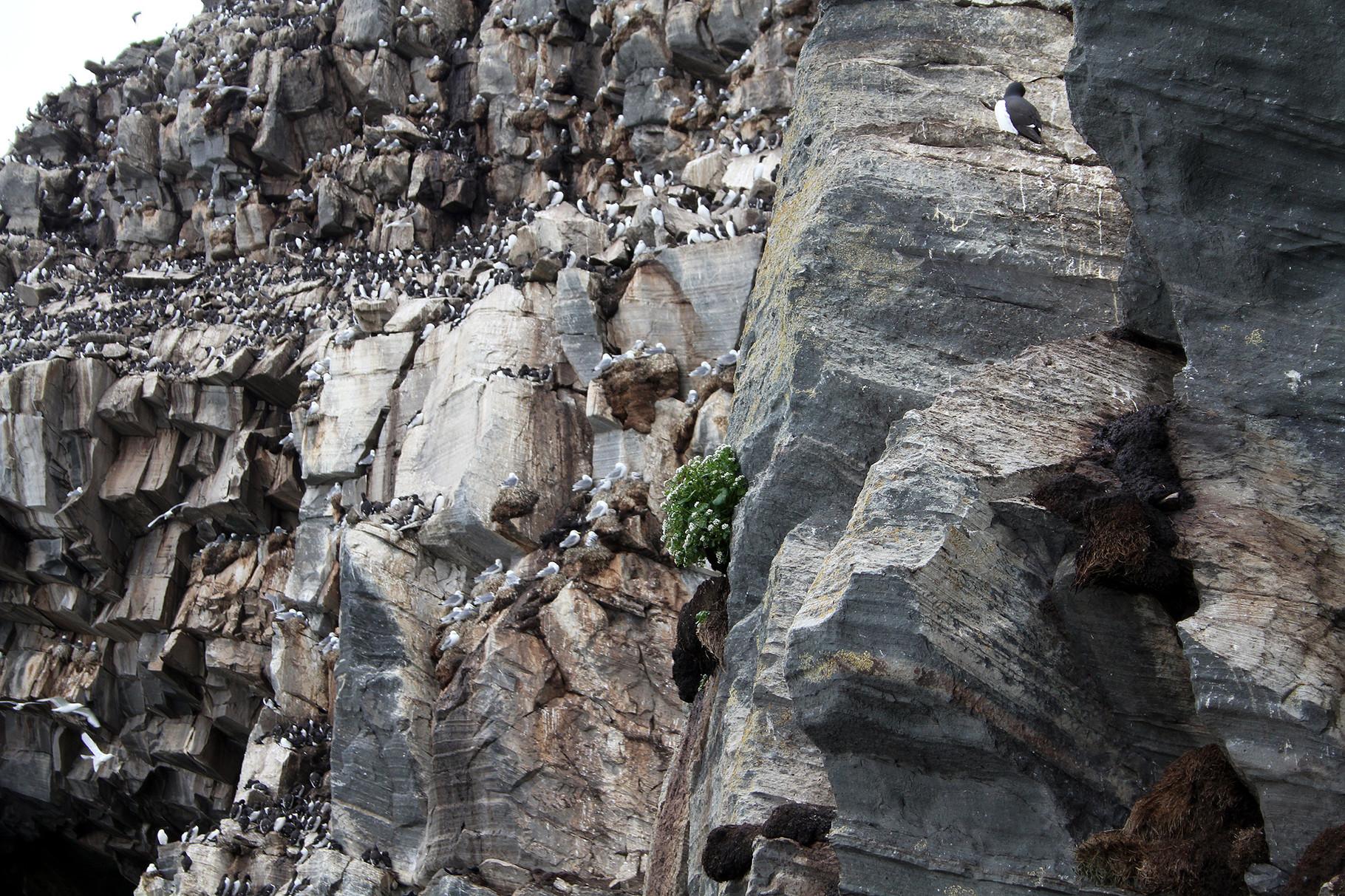 Vom einzigen erlaubten Weg aus sind die Brutvogel-Kolonien aus nächster Nähe zu beobachten