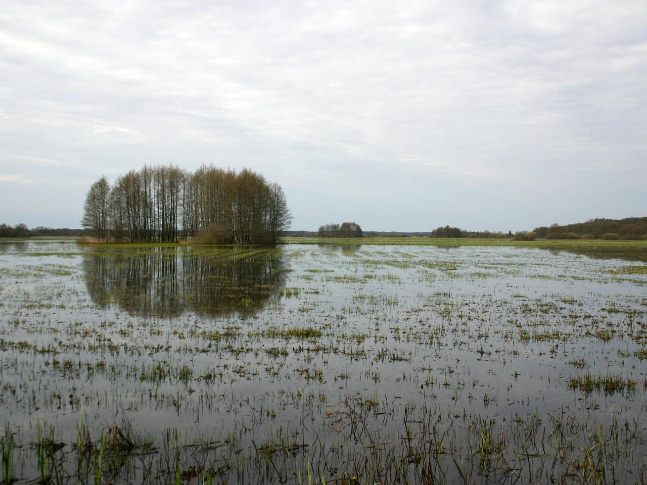 Überflutetes Land bei Goniadz