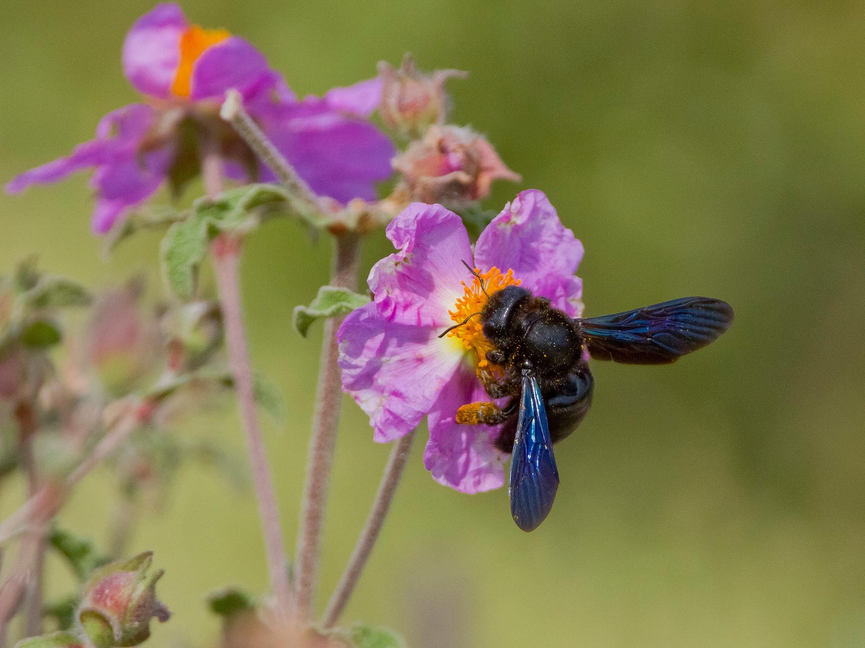 Kleine Wunder am Weg aus der Insektenwelt