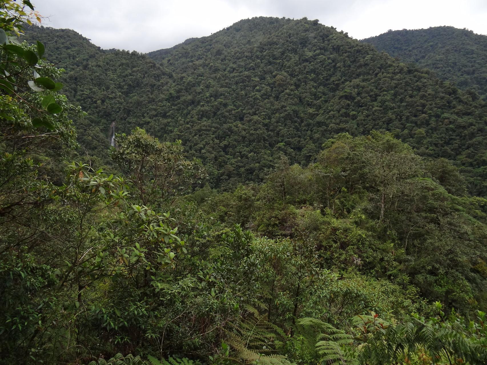 Blick auf einen Teil des Tapanti-Nationalparks – Regenwald soweit das Auge reicht
