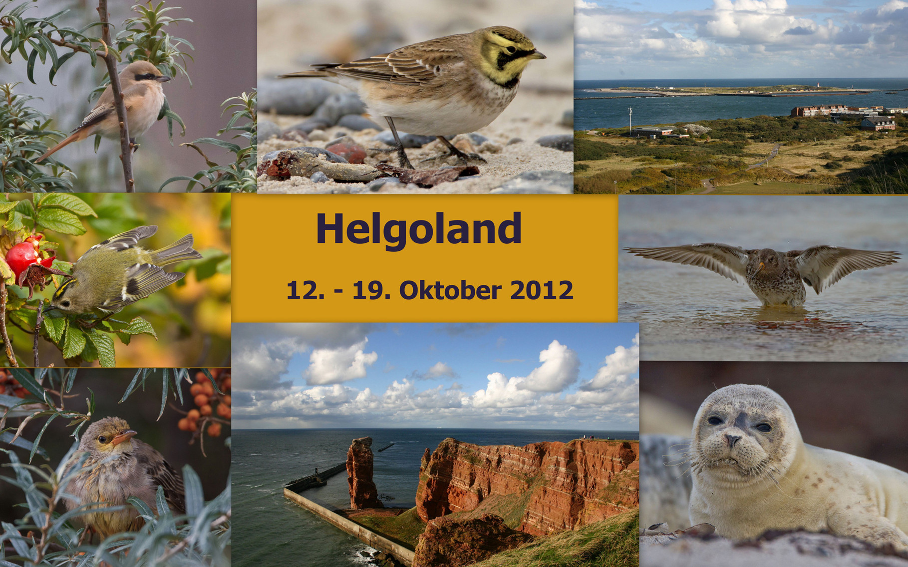 Starte die Bilder-Galerie unserer Helgoland-Reise im Oktober 2012