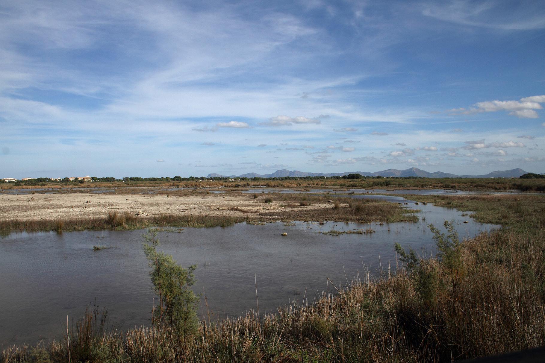 Feuchtgebiet s'Albufera im Norden der Insel