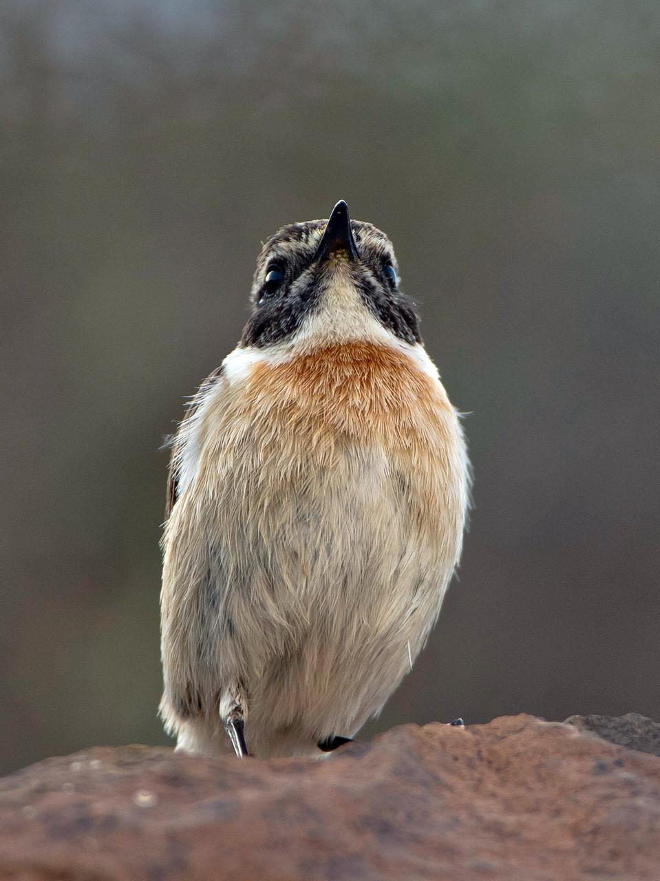 ... eine endemische Vogelart, ...