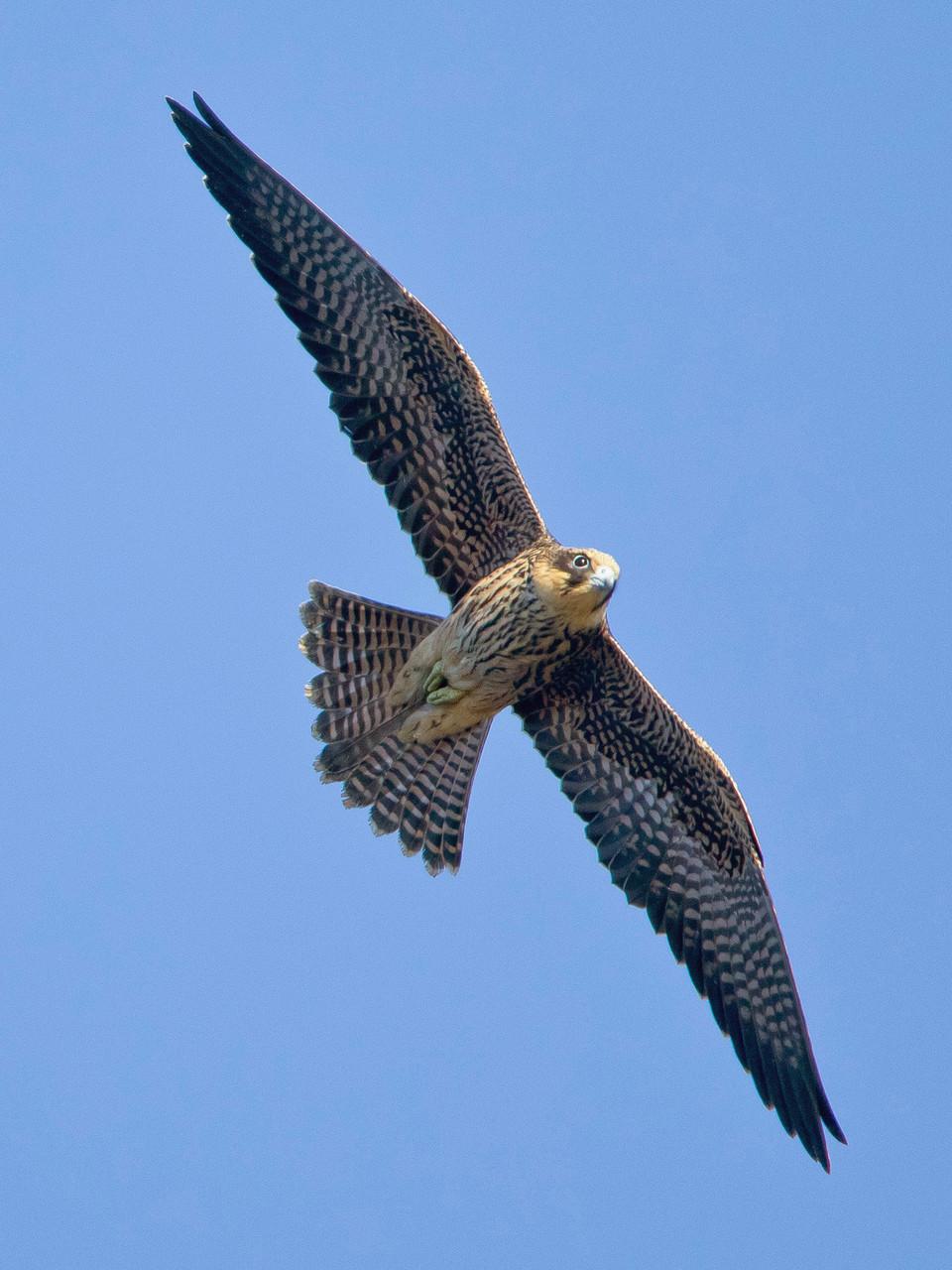 ... sowie verschiedene Vögel im Jugendkleid