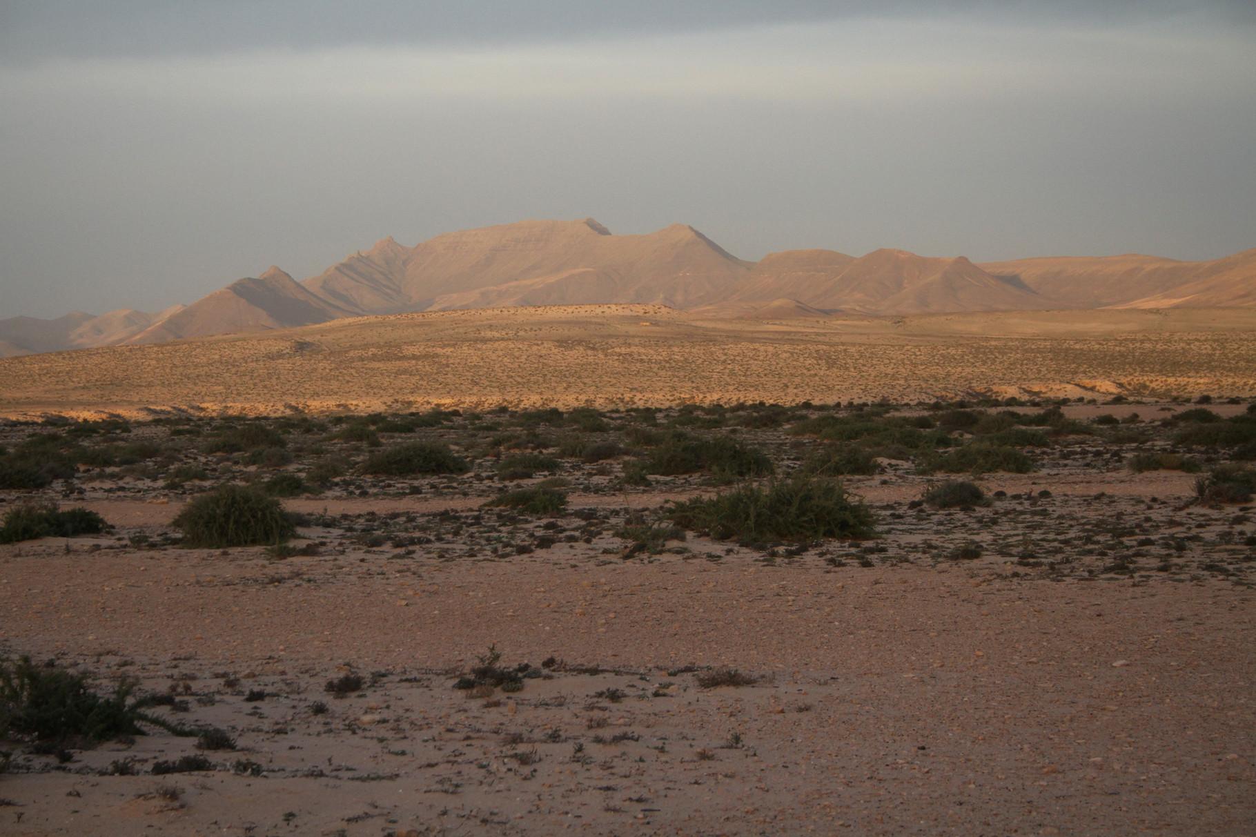 Abendstimmung in der Jandia-Halbwüste