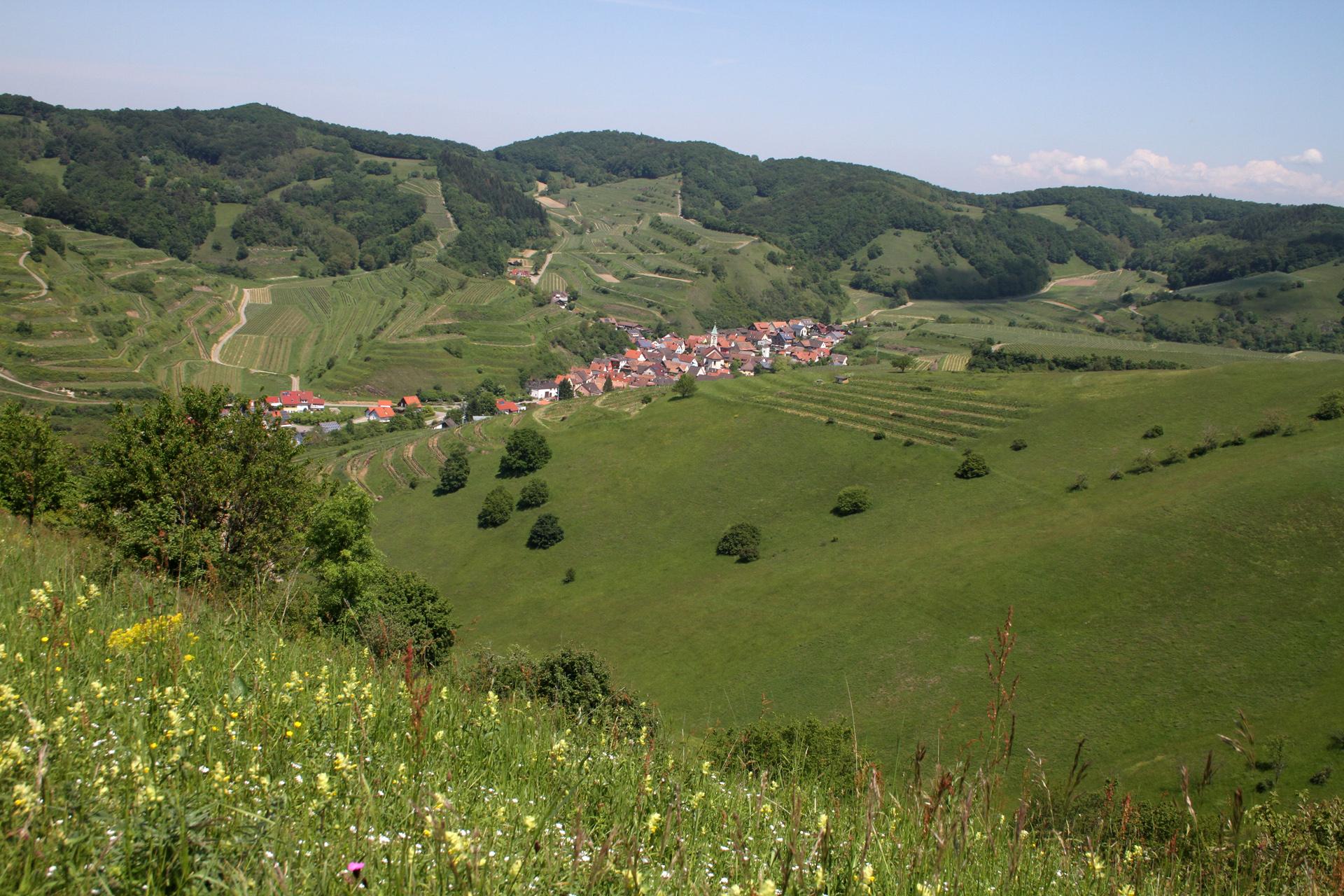 Die Weinbaudörfer - hier Schelingen - schmiegen sich harmonisch in die Landschaft