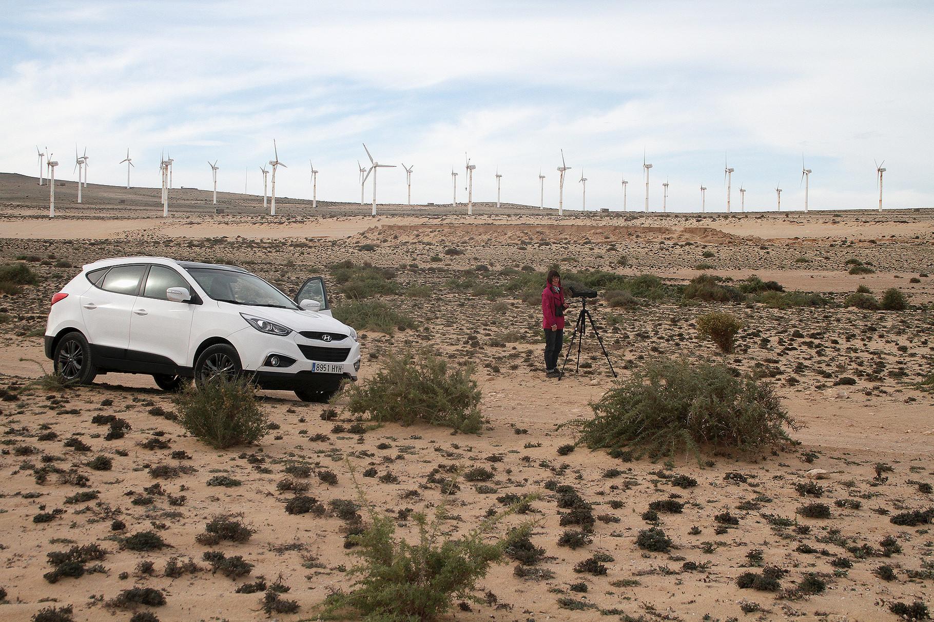 ...ist unser meistbesuchtes Beobachtungsgebiet im Süden von Fuerteventura