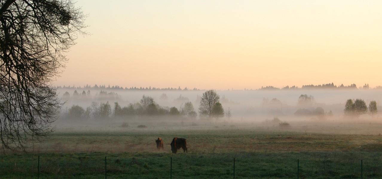 Im Morgennebel die erste Überraschung...