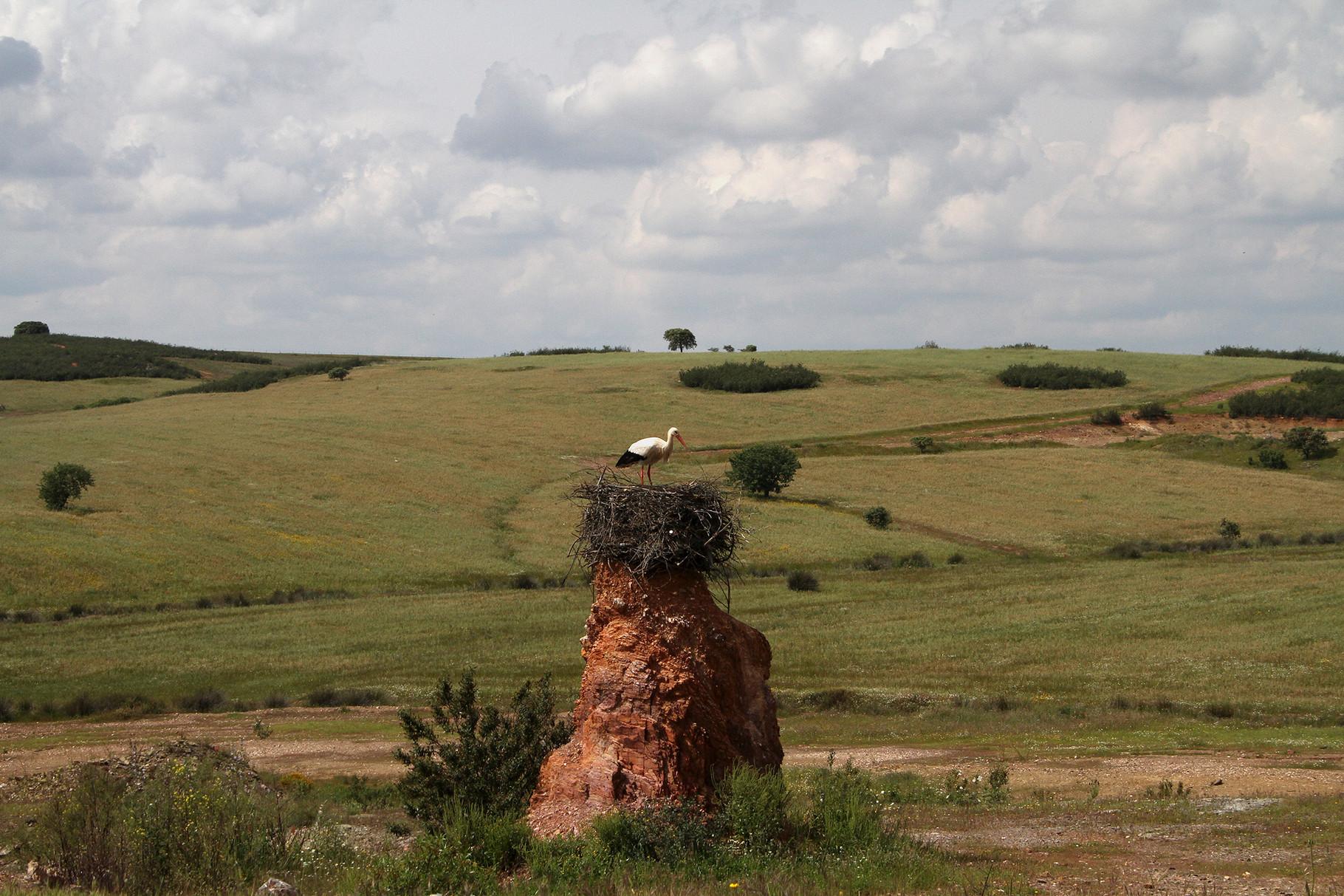 Ein spezieller Neststandort eines Weissstorch-Paars
