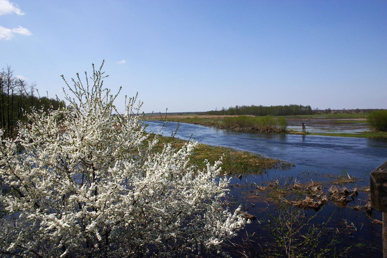 Gegen Ende der Woche geht das Hochwasser zurück und die Bäume beginnen zu blühen