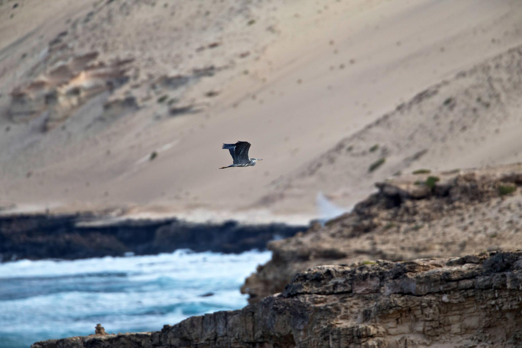 An der Nordwestküste der Jandia-Halbinsel ...