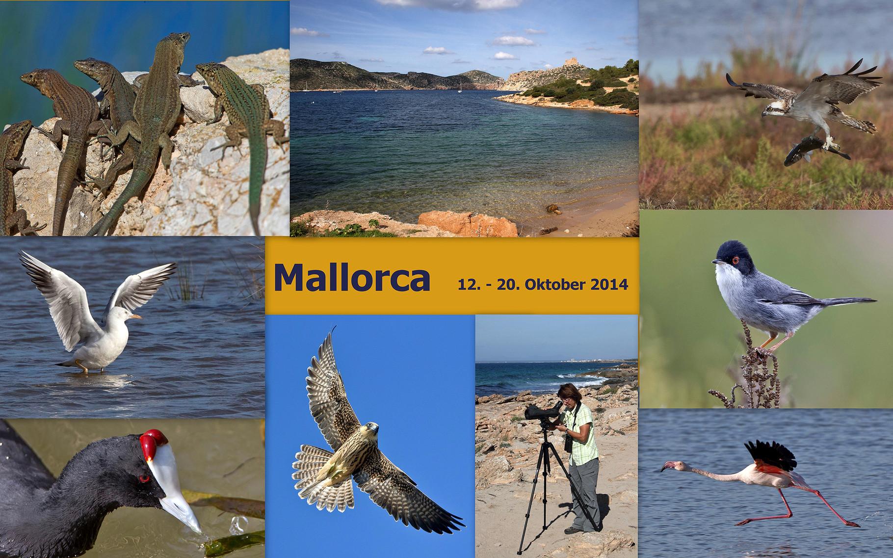 Starte die Bilder-Galerie unserer Mallorca-Reise im Oktober 2014