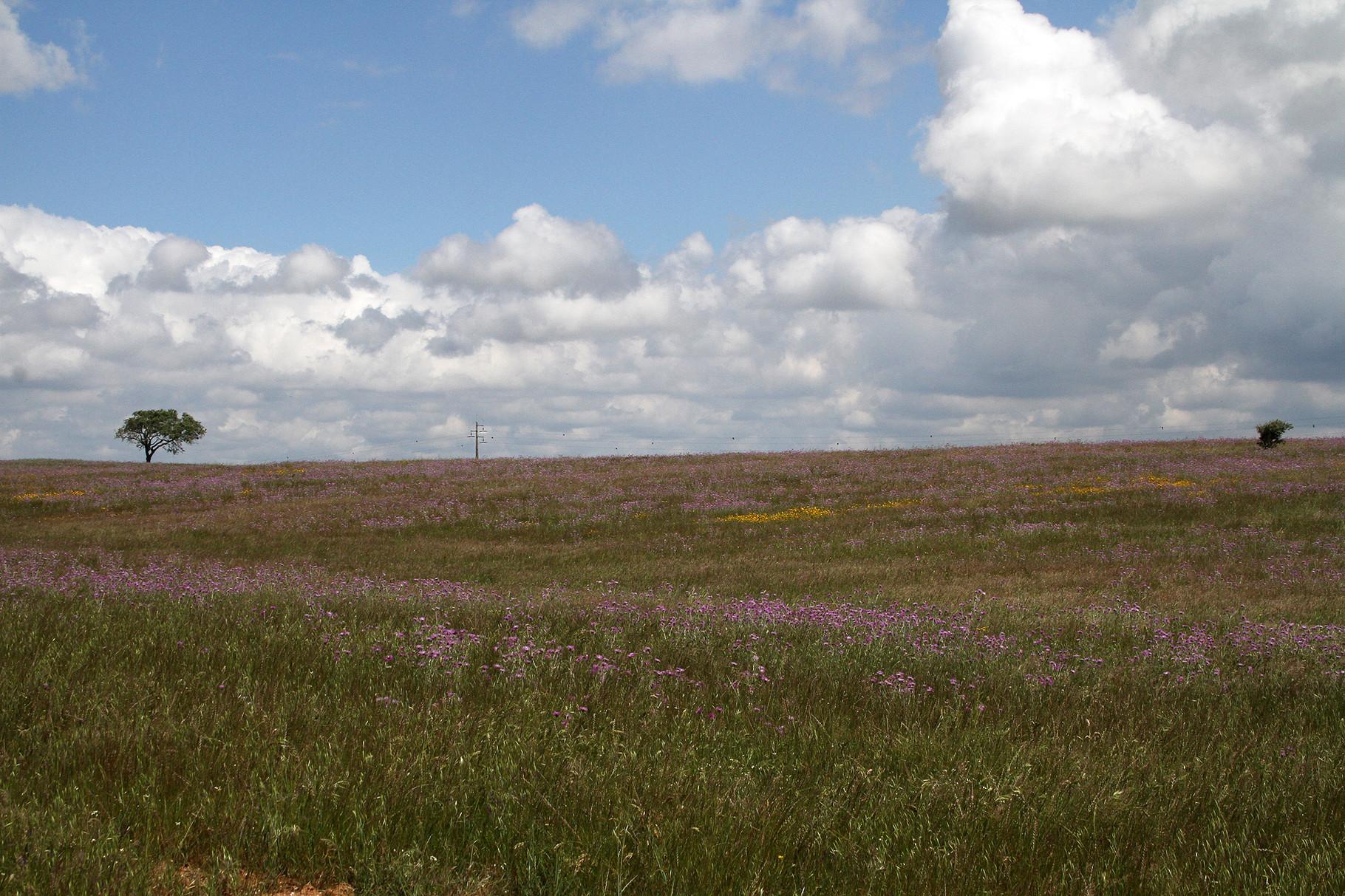 Das Gebiet um Castro Verde (Portugal) ist eine der grössten Grassteppen-Landschaften Europas