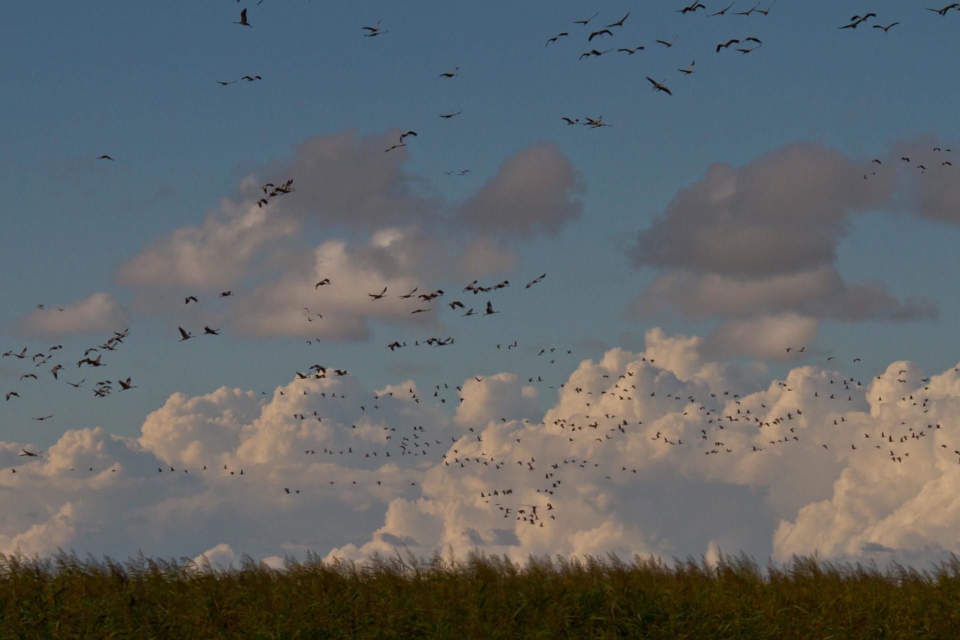 ... ausser wenn alle hochfliegen, aufgeschreckt durch irgendeine Störung. Inzwischen ziehen Wolken auf.