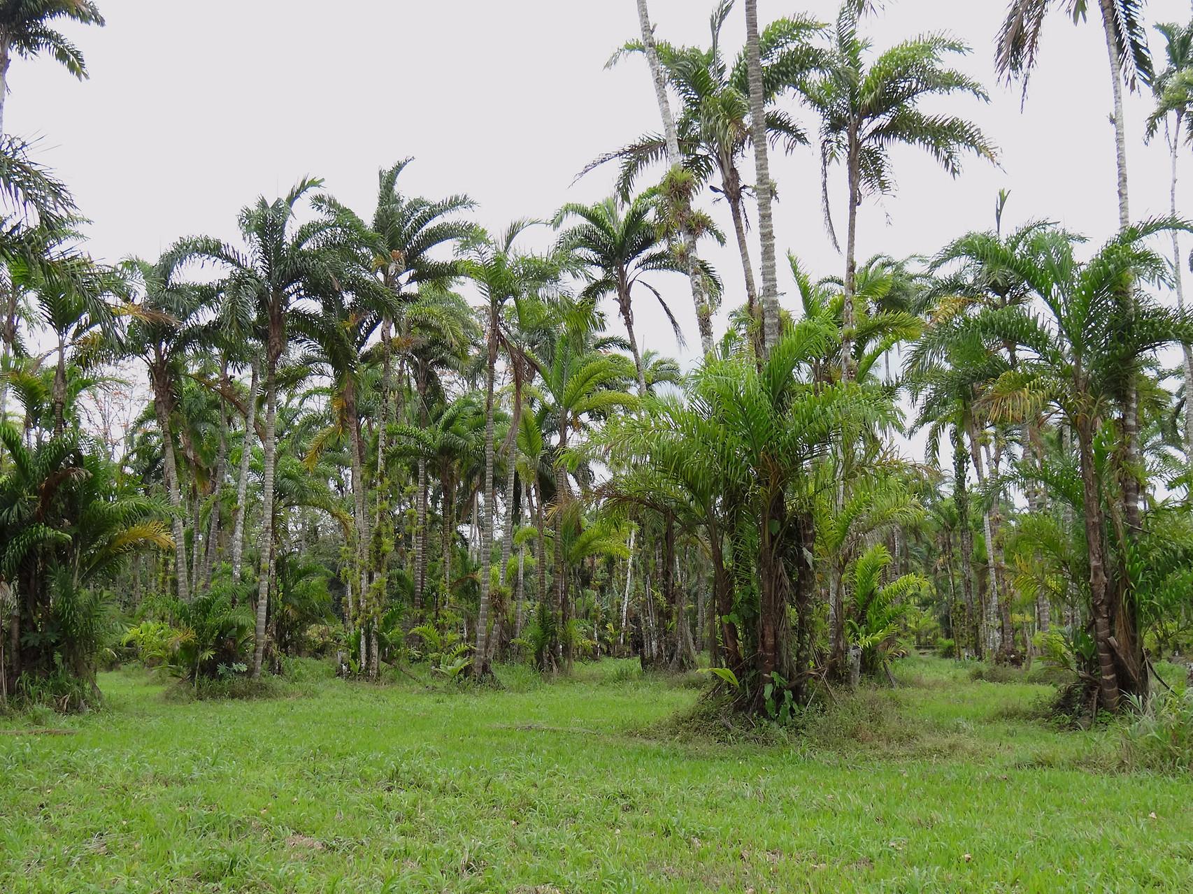 In Turrialba besuchen wir die Biologische Forschungsstation CATIE