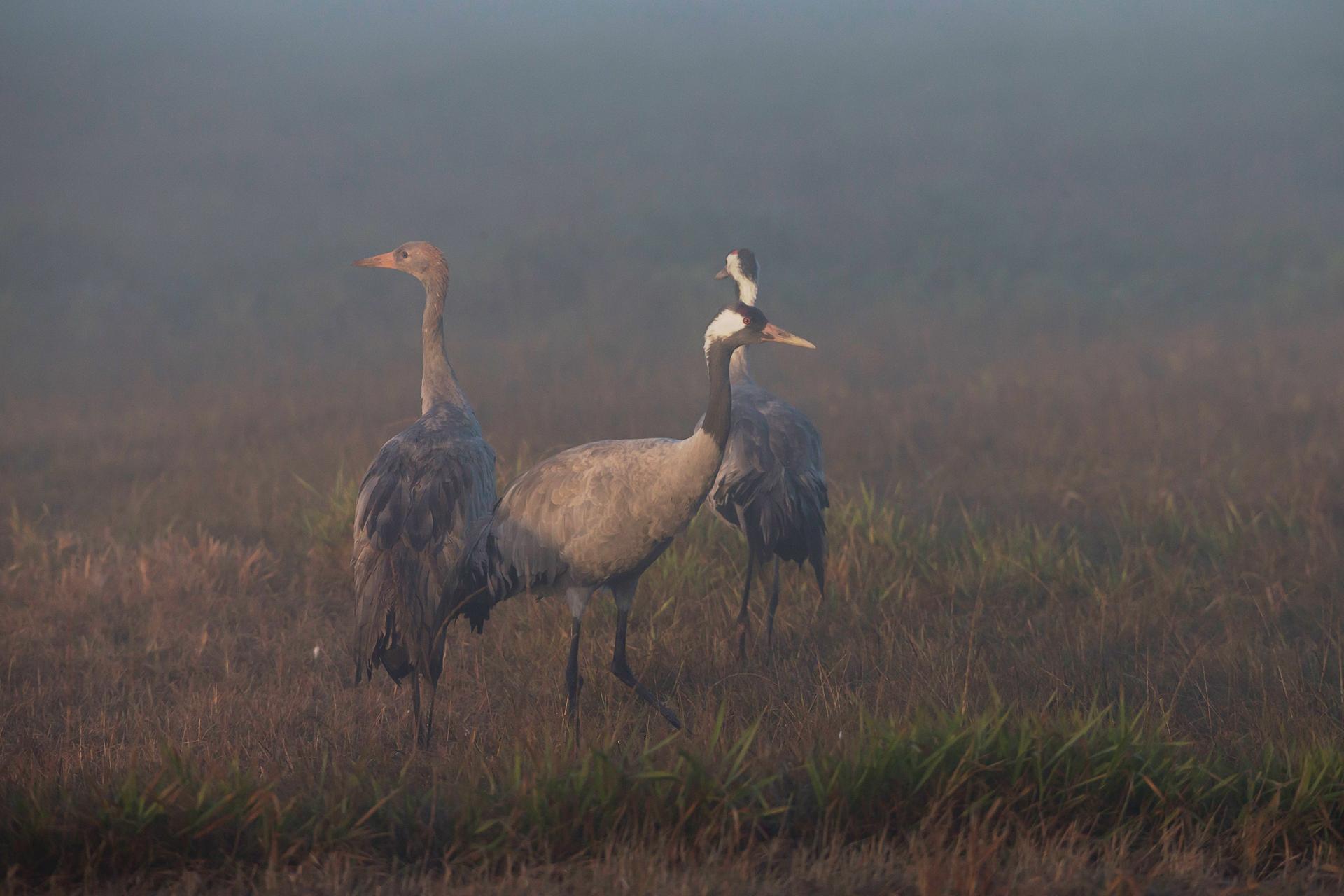 Langsam bricht die Morgensonne durch den Nebel