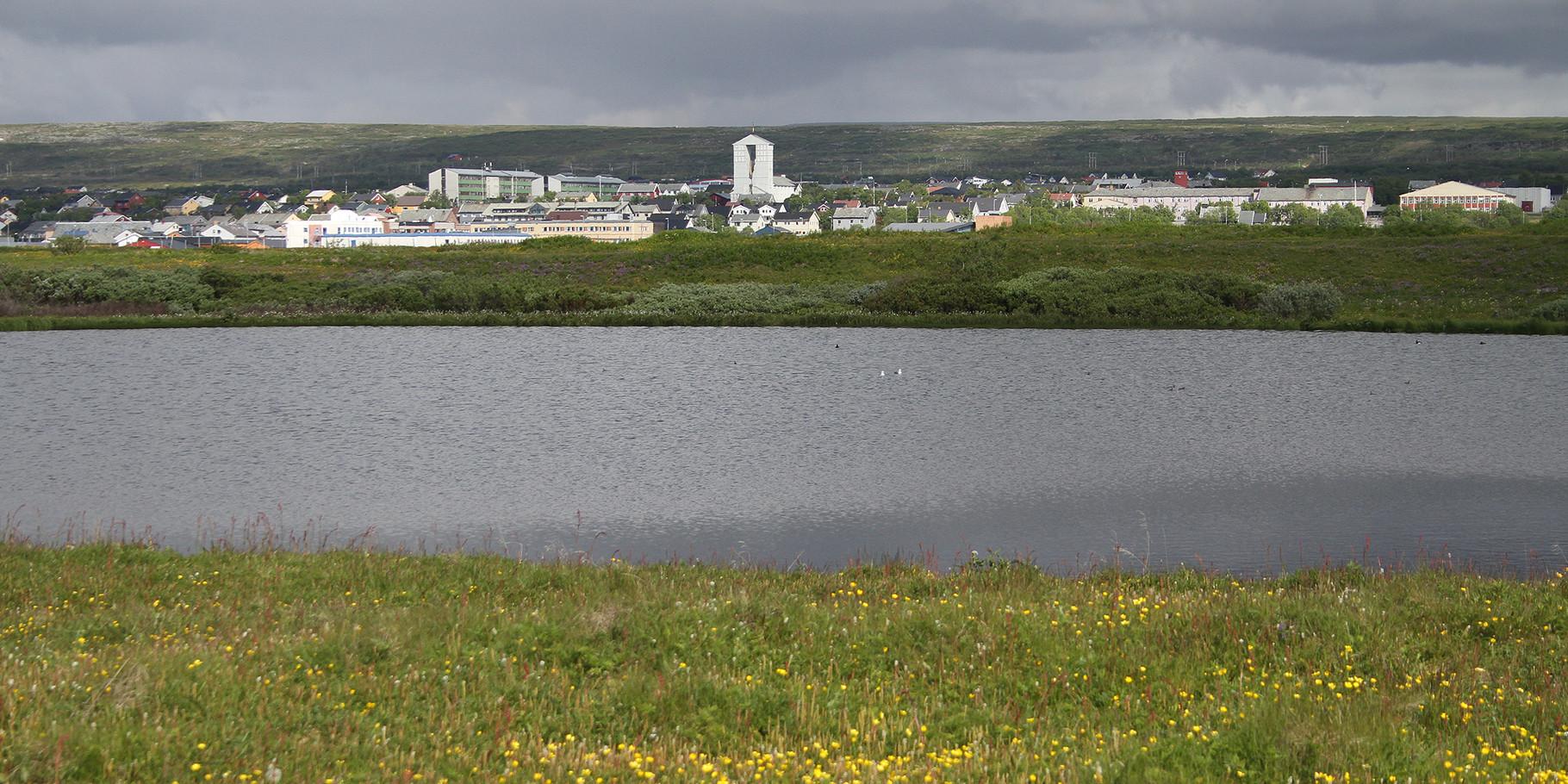 Ein weiterer ergiebiger Beobachtungspunkt ist der Teich auf Vadsoya, nahe unserem Standort Vadso, der grössten Stadt am Varanger Fjord