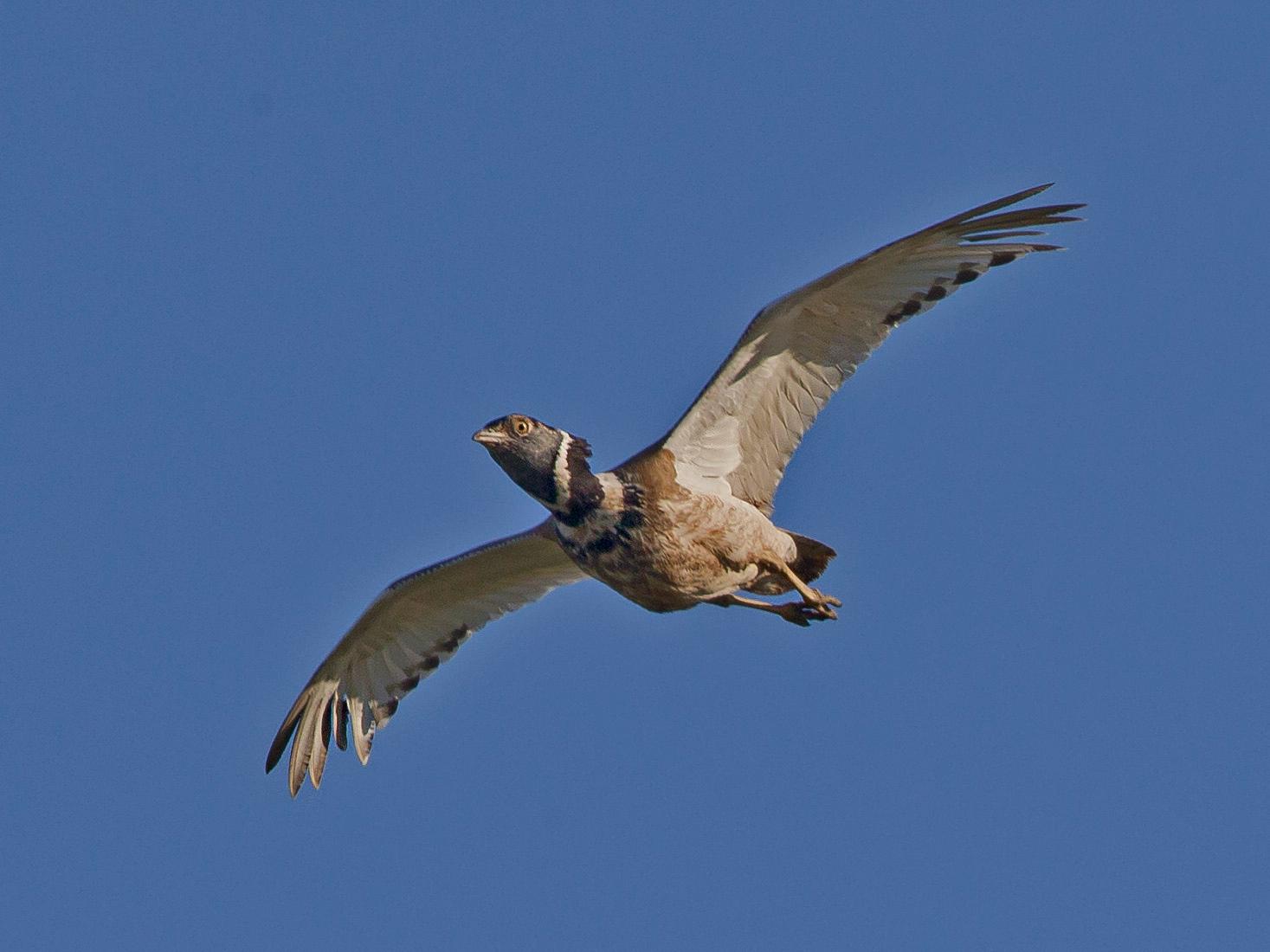 ... und meistens nur fliegend zu fotografieren