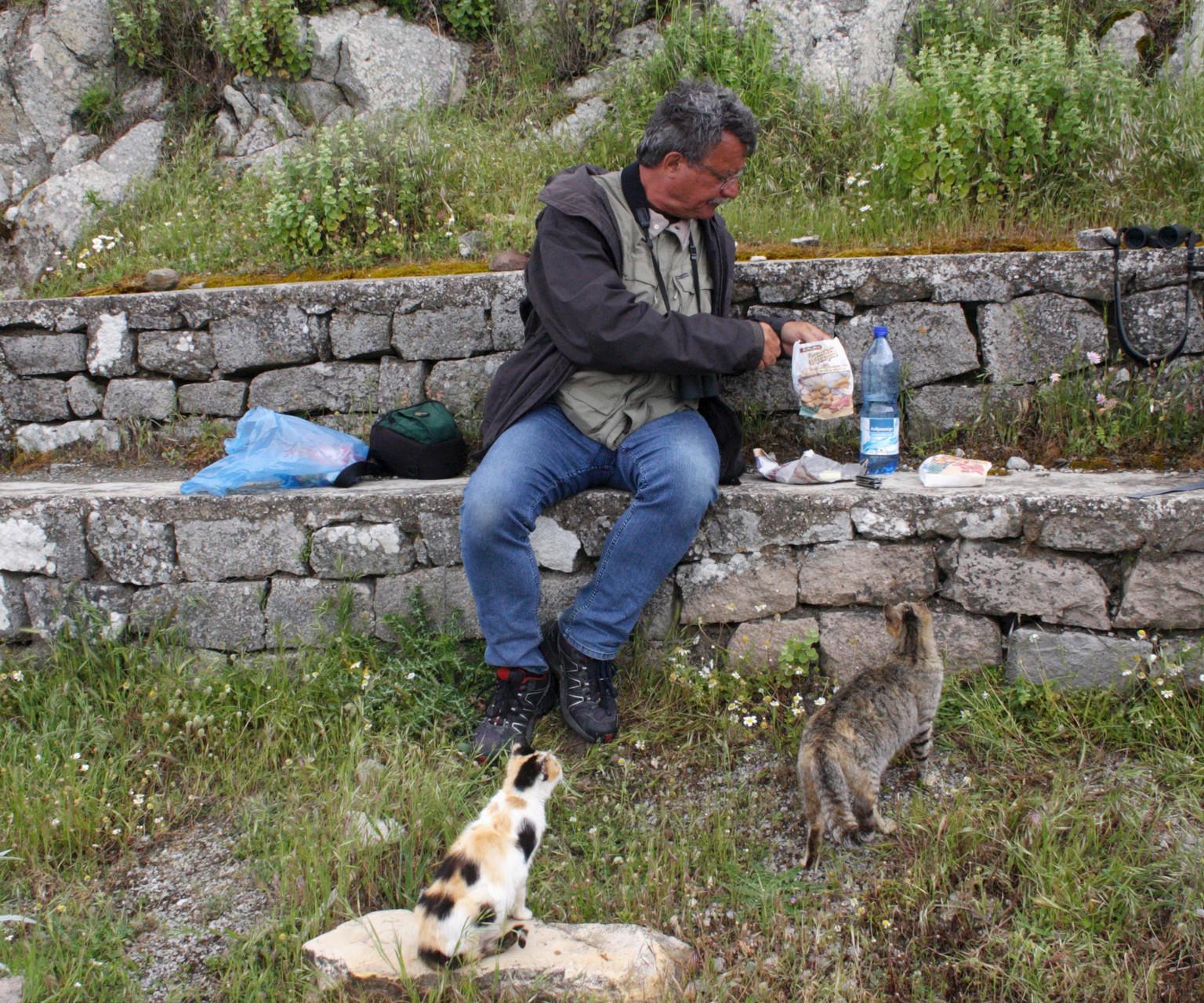 Beim Picknick auf Ipsilou wurden wir von zwei hungrigen Katzen belagert