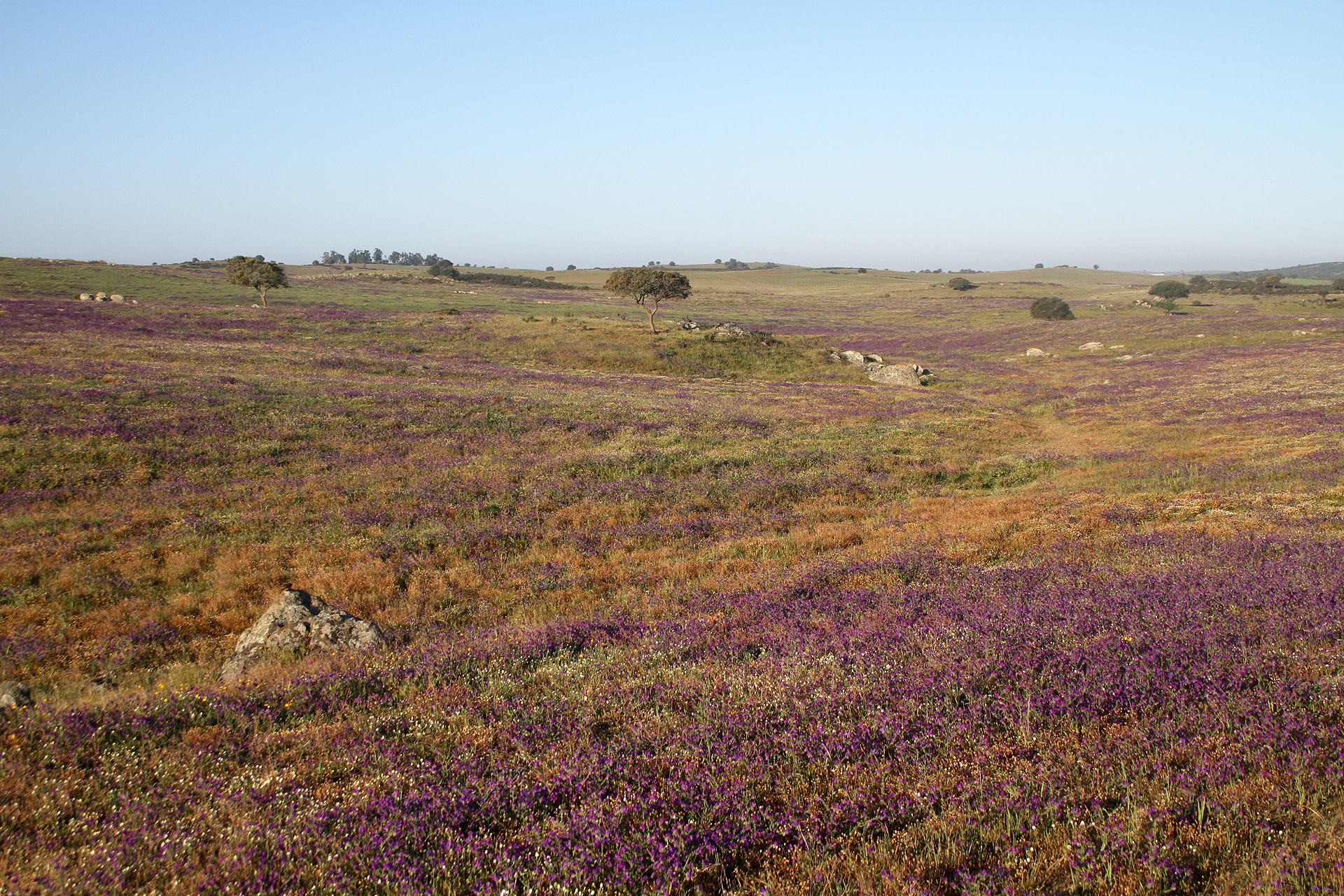 Die Grassteppen-Landschaft um Castro Verde, anfangs April ein Blumenmeer.