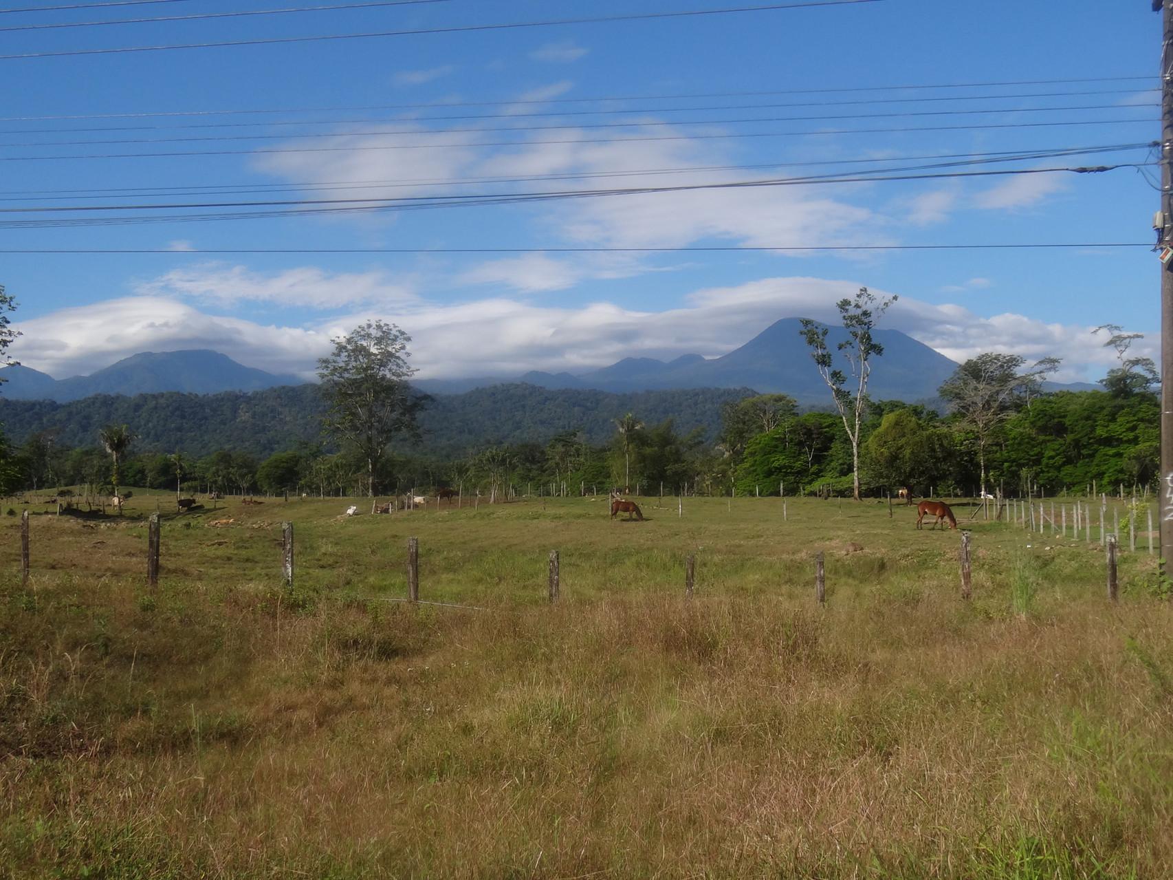 Fahrt durch das flache karibische Tiefland in der Gegend von Puerto Viejo de Sarapiqui